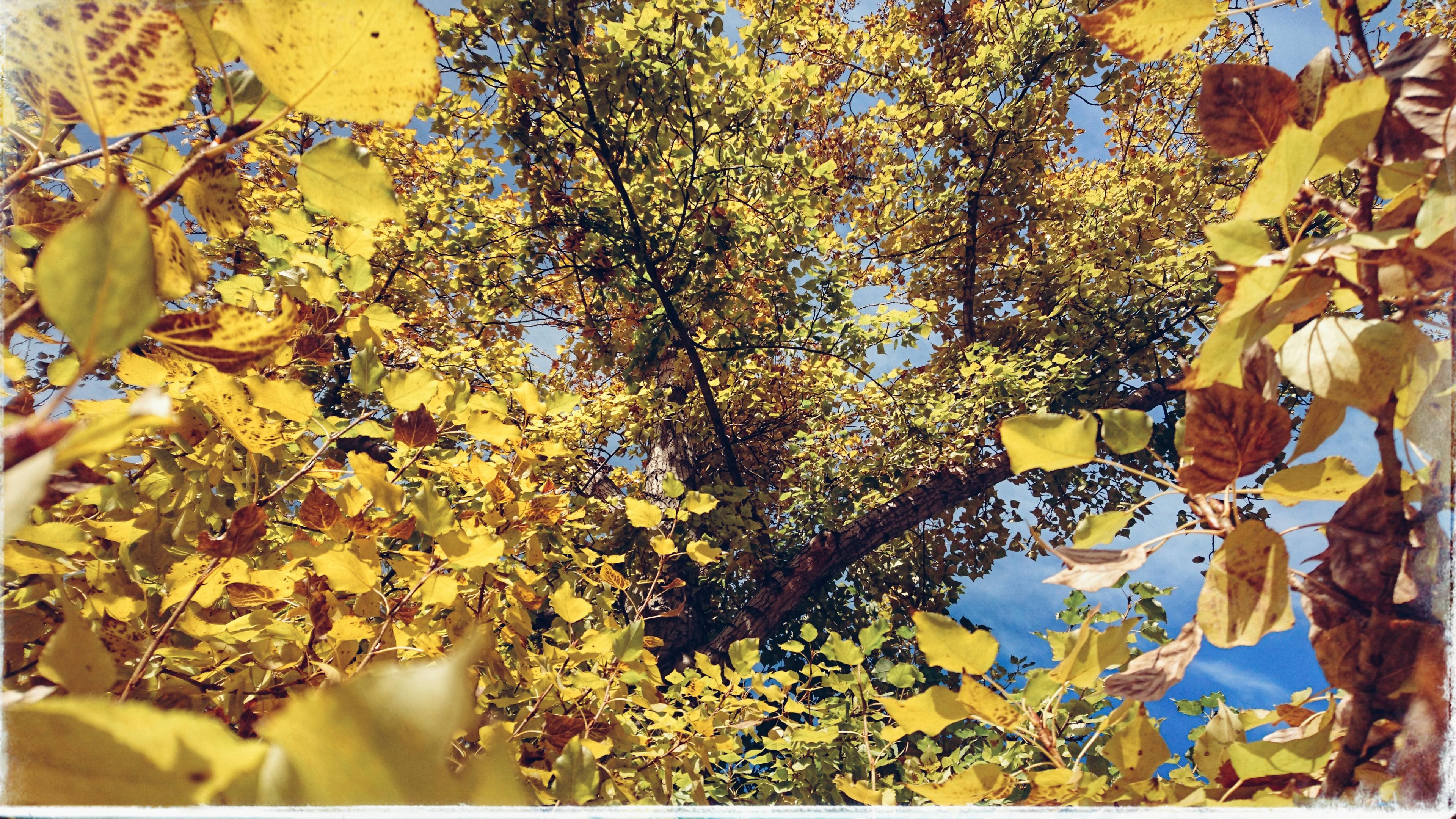 Fotos Gratis : Soleado, Follaje, Ramas, Amarillo, árbol