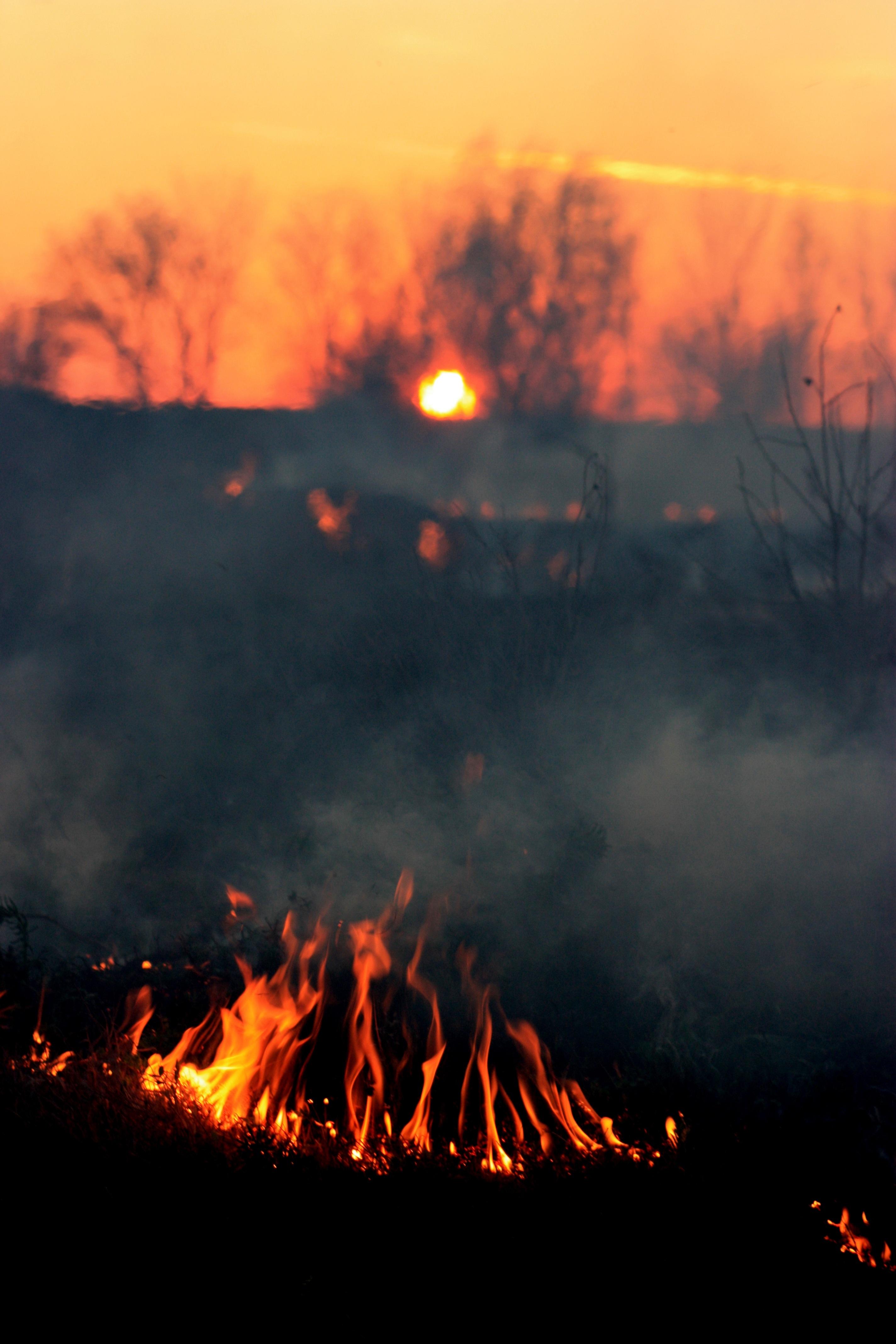 избавления картинки пожара от солнца классические круглые букеты