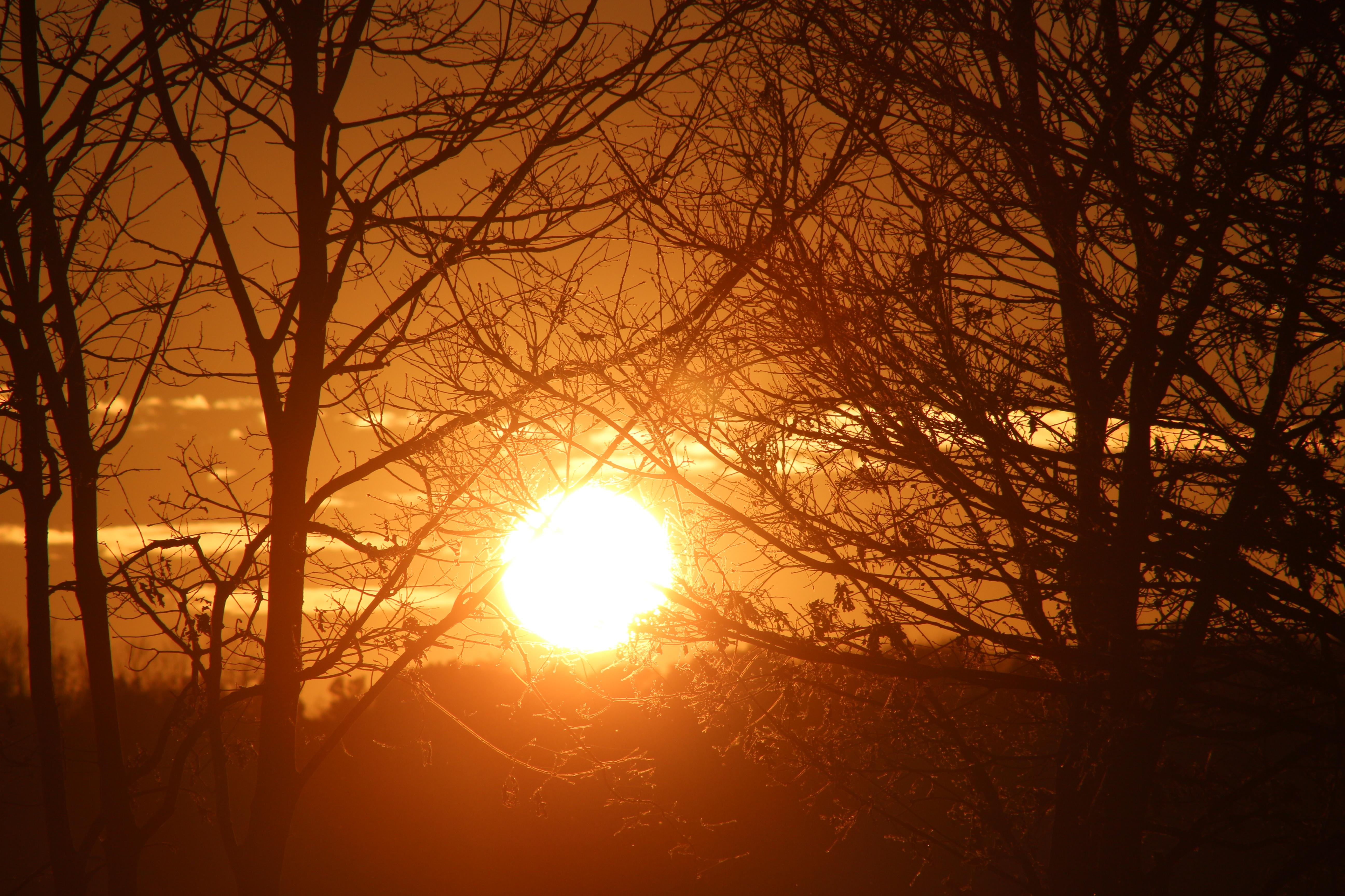 Free Images Sunset Sun Sunrise Branch Atmosphere