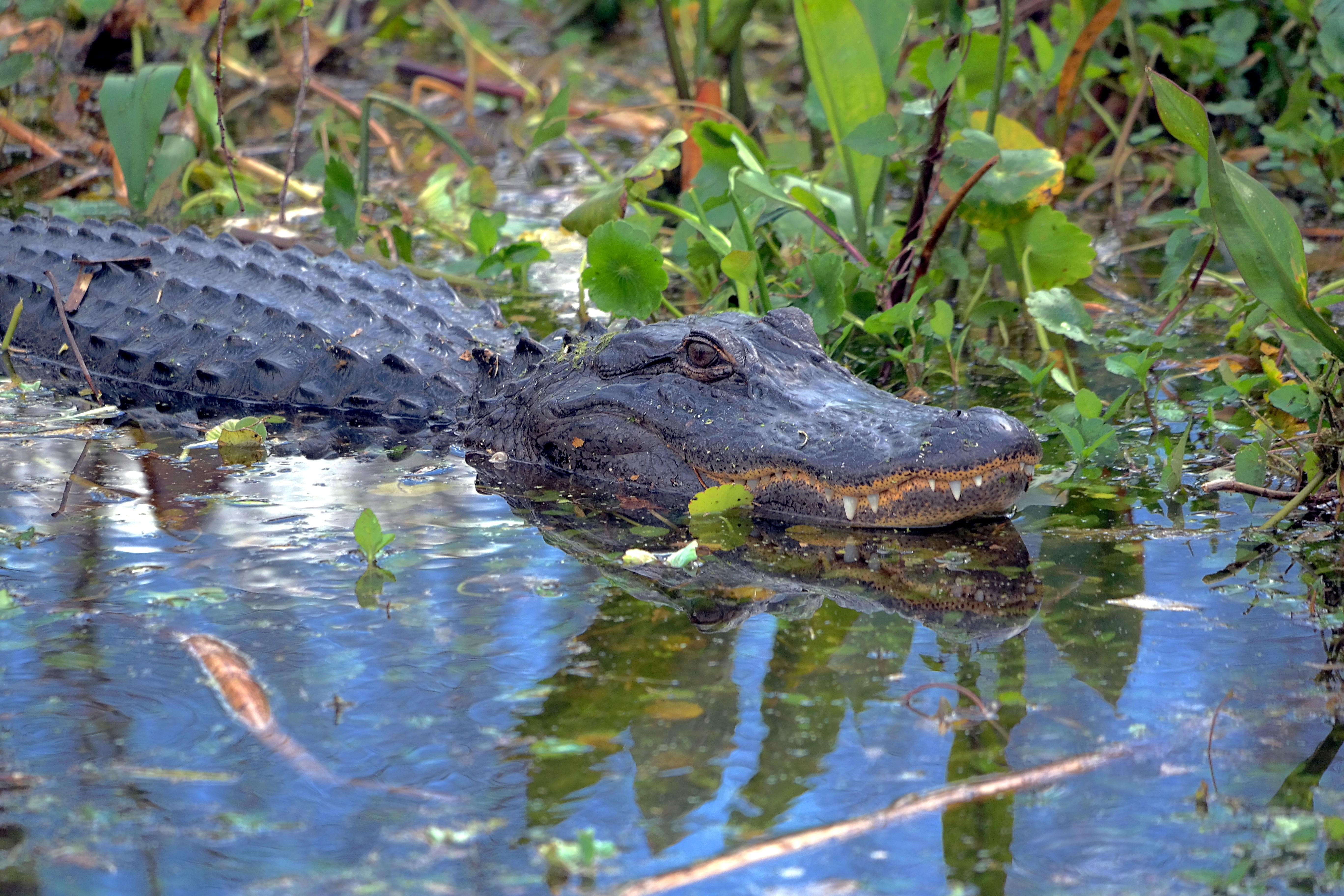 Fotos gratis pantano animal estanque fauna silvestre for Imagenes de estanques para ninos