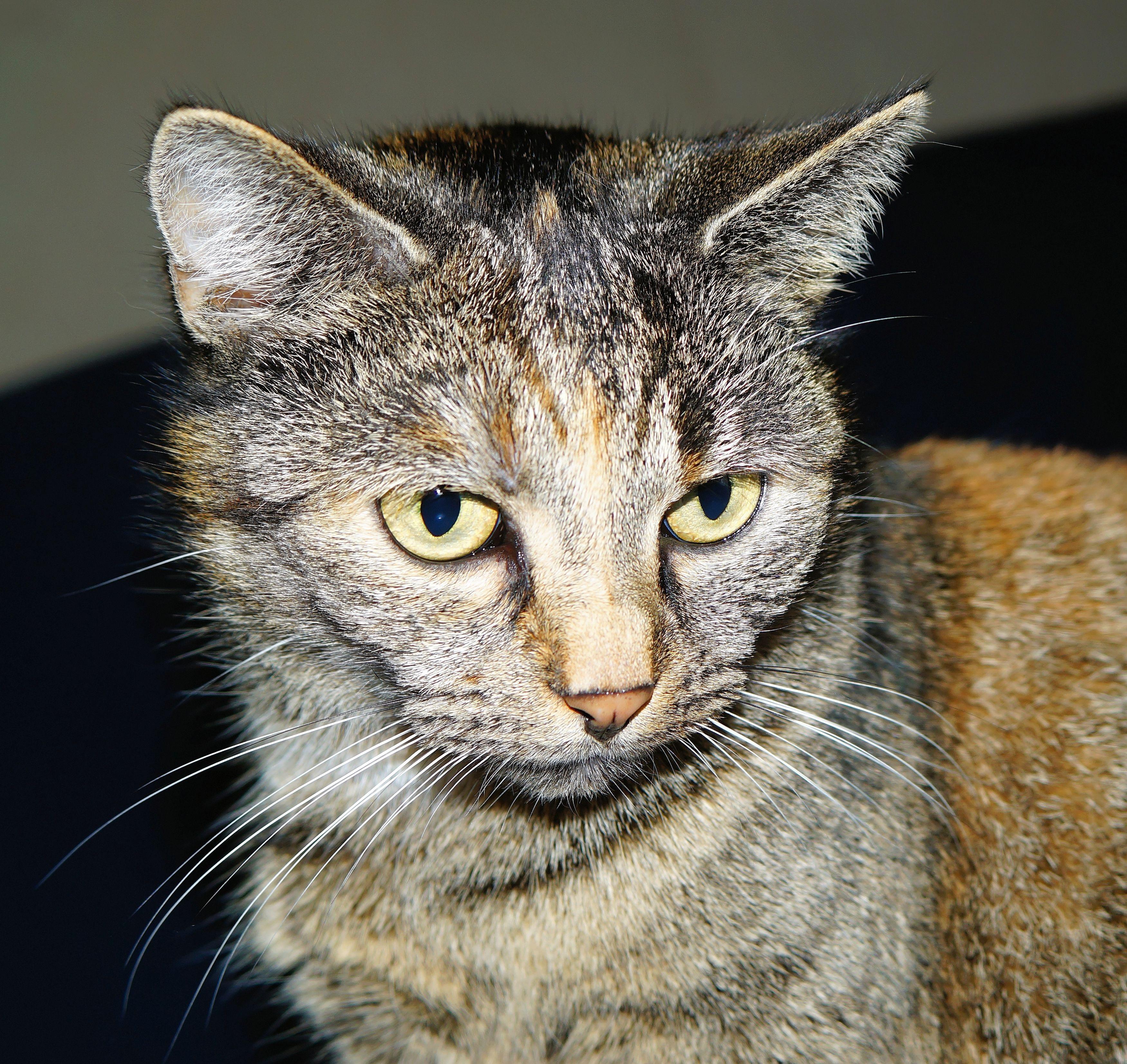 Кот на пол лица