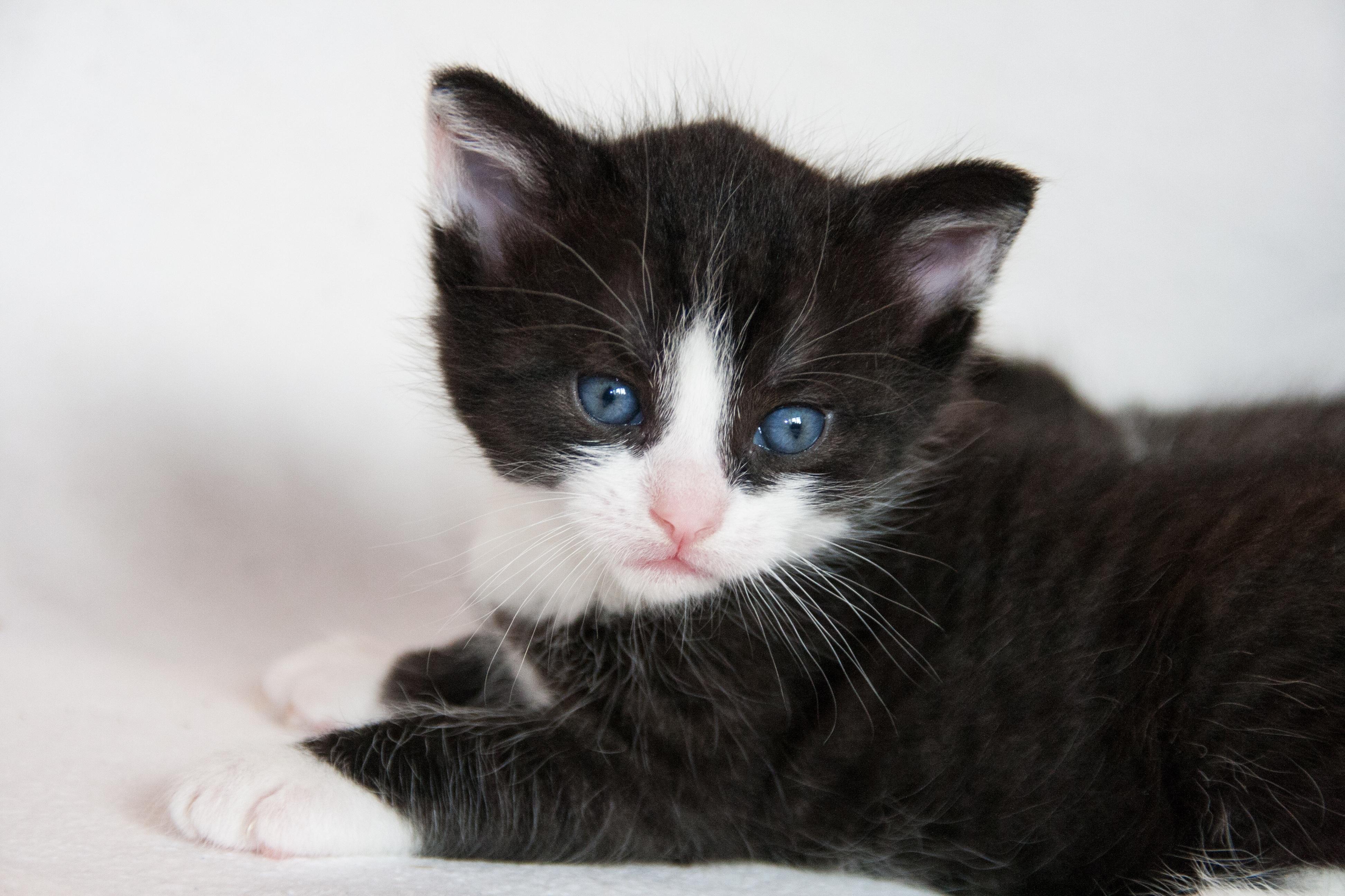 Nejlepší černá kočička jíst
