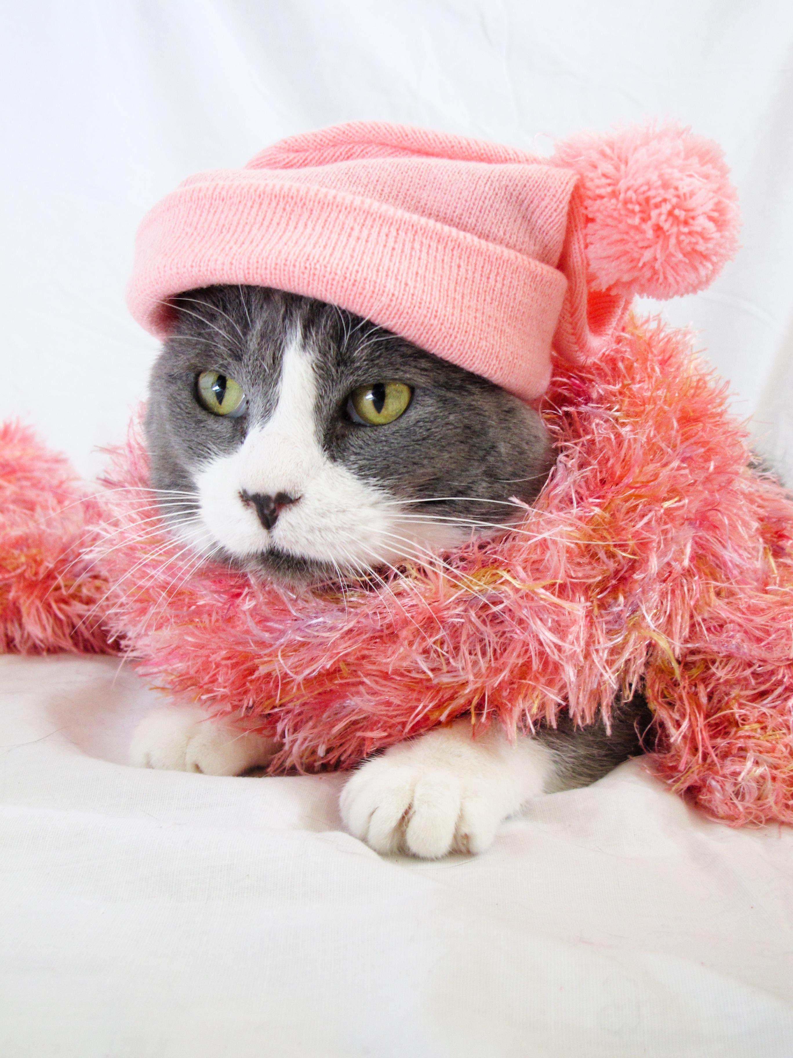 ... licik, binatang menyusui, kelabu, topi, berwarna merah muda, syal, lokal, menarik, boneka, kecil untuk kucing berukuran sedang, kucing seperti mamalia ...