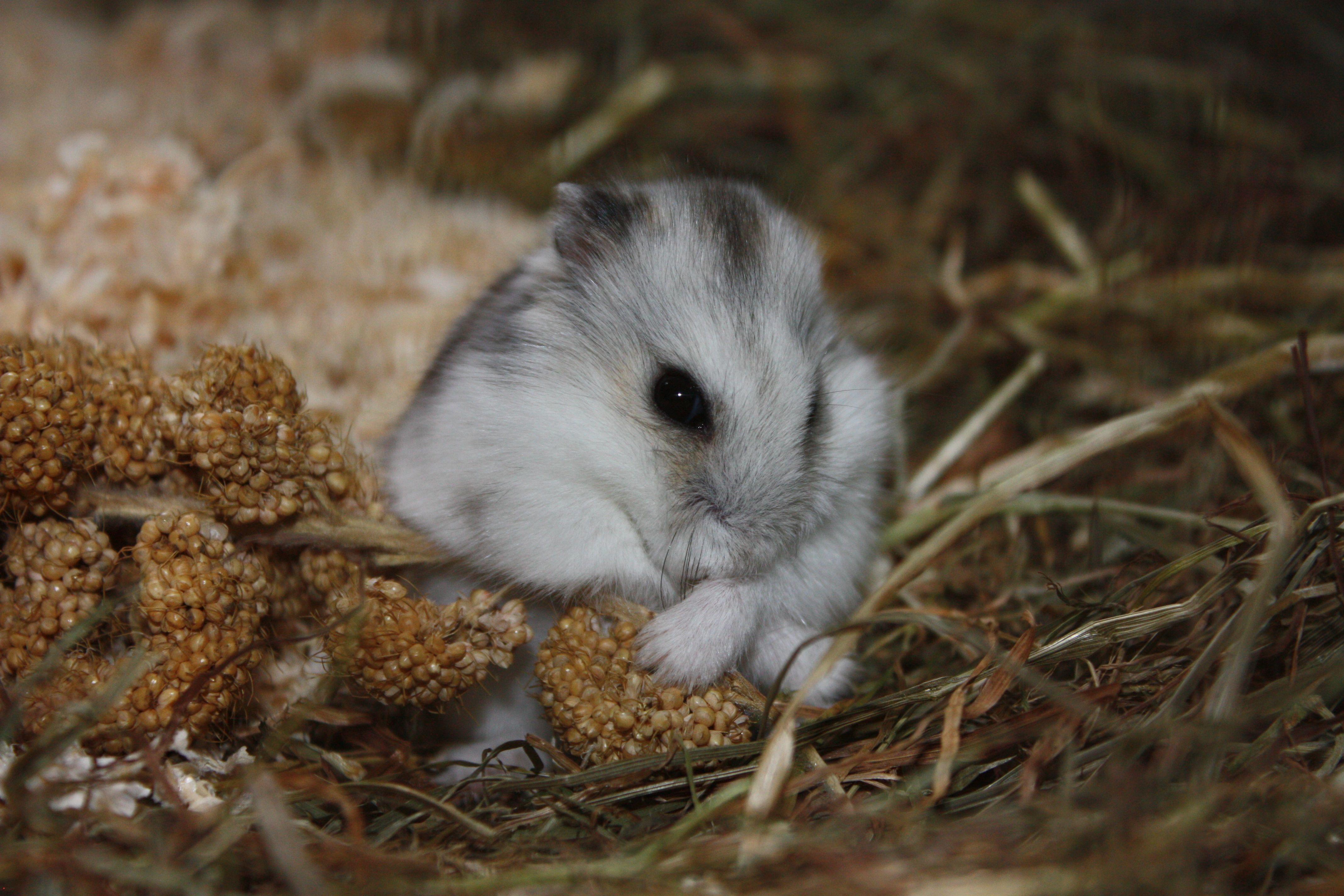 Gambar Manis Imut Margasatwa Tenang Kecil Binatang