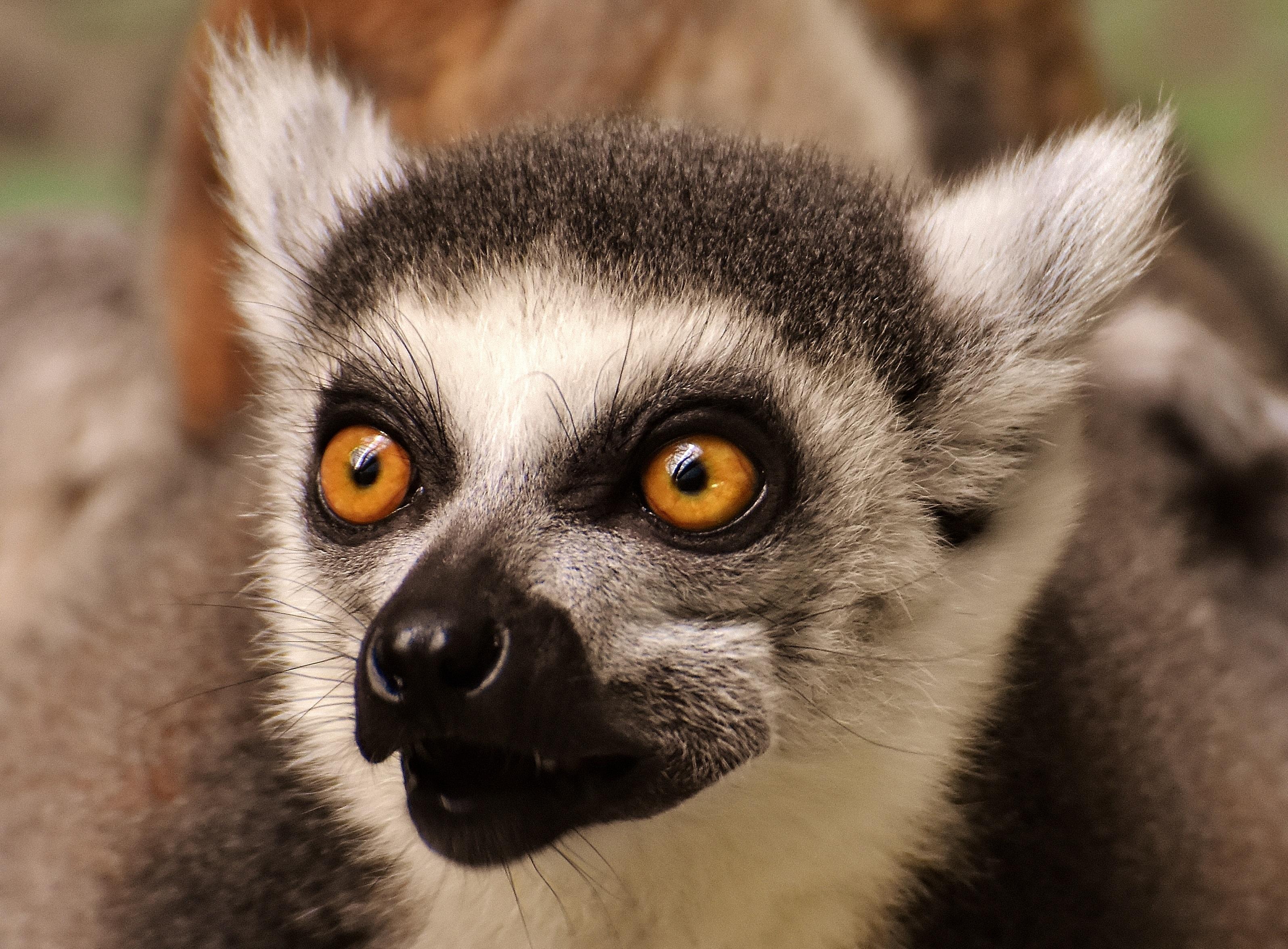 Fotoğraf Tatlı Hayvan Sevimli Vahşi Hayat Hayvanat Bahçesi