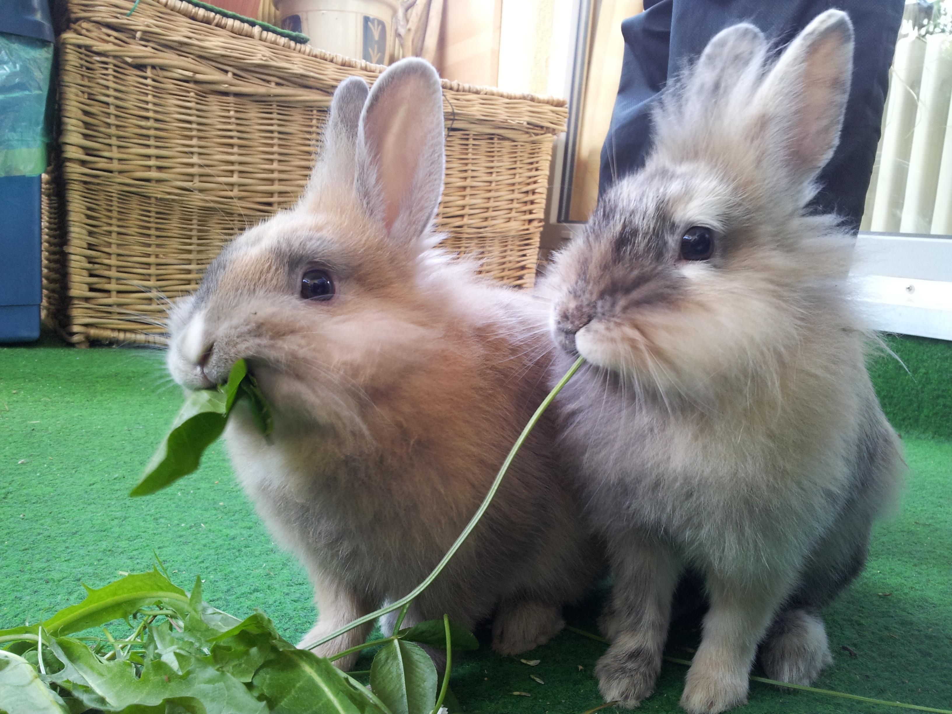 Gambar Manis Binatang Menyusui Makan Fauna Hewan Peliharaan