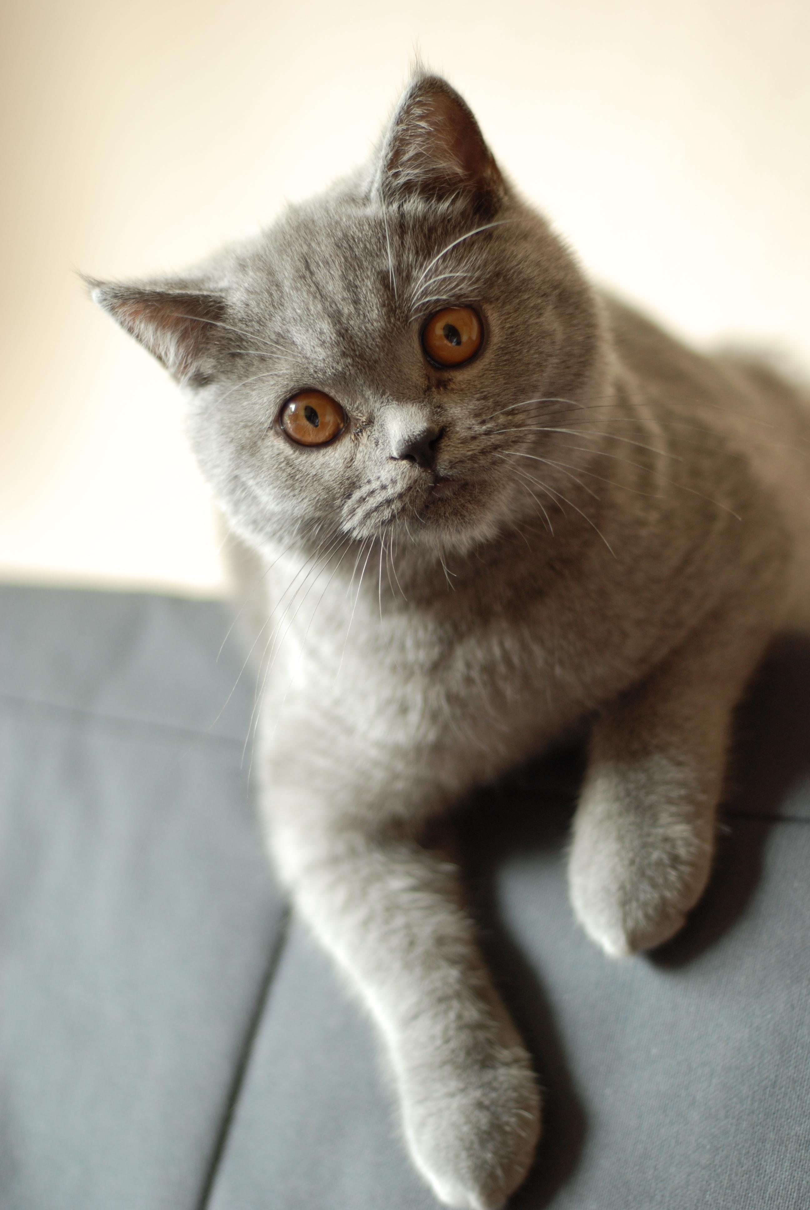 Free sweet animal pet coat feline whiskers