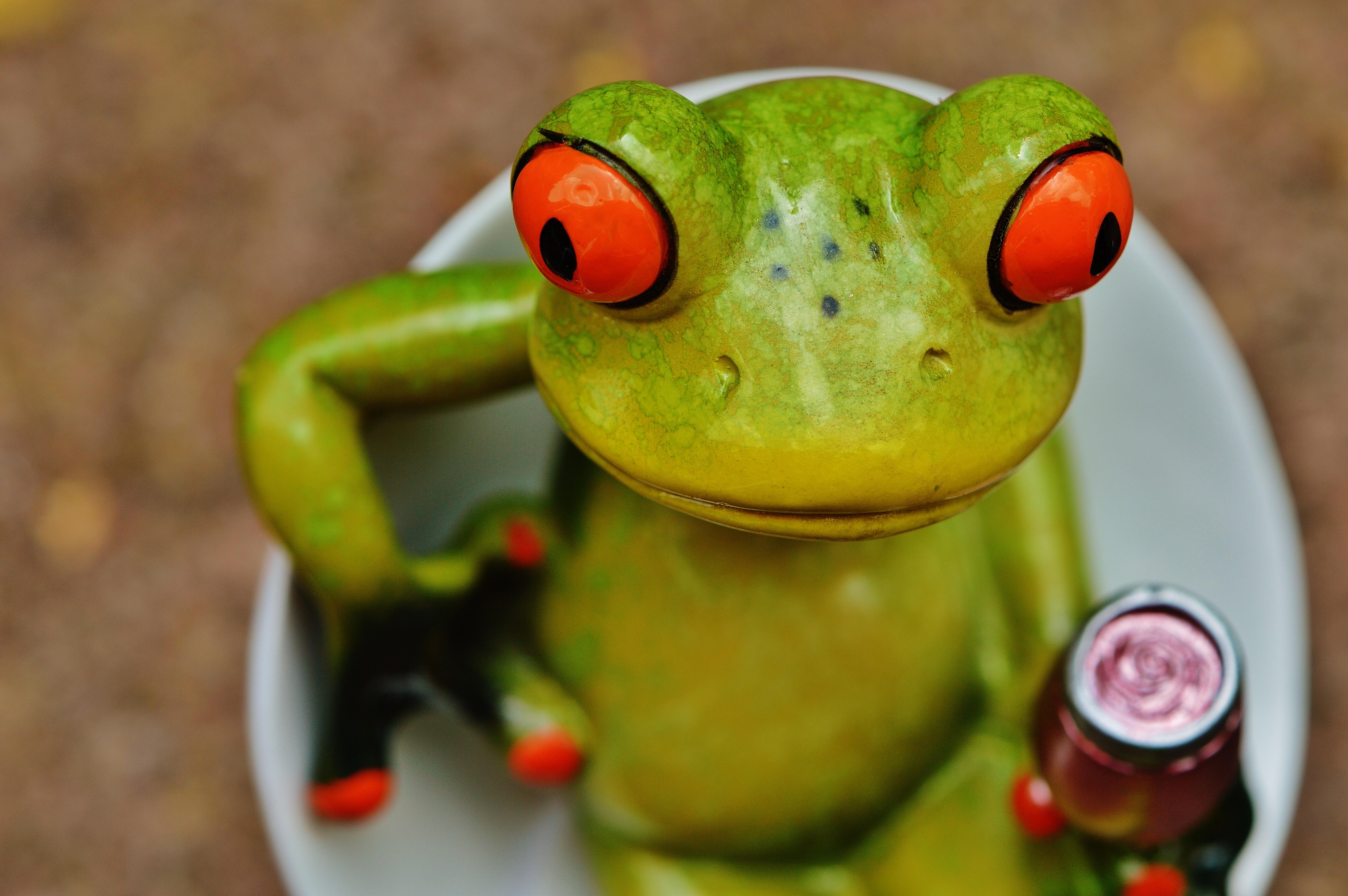 картинки лягушка пьет коктейль время необходимо для