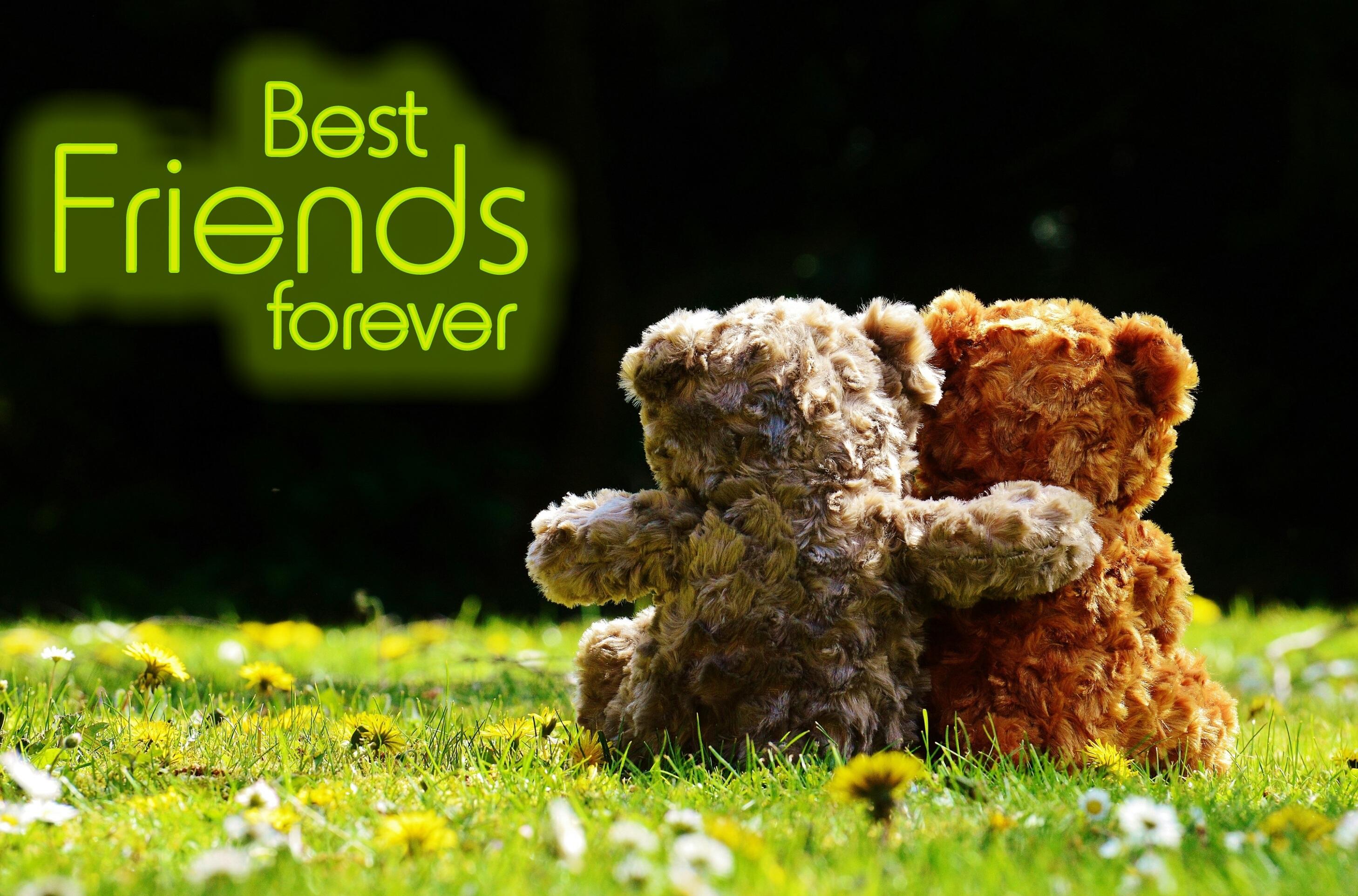 sweet cute bear love produce romance romantic friendship forever teddy bear  affection friends toys bears funny