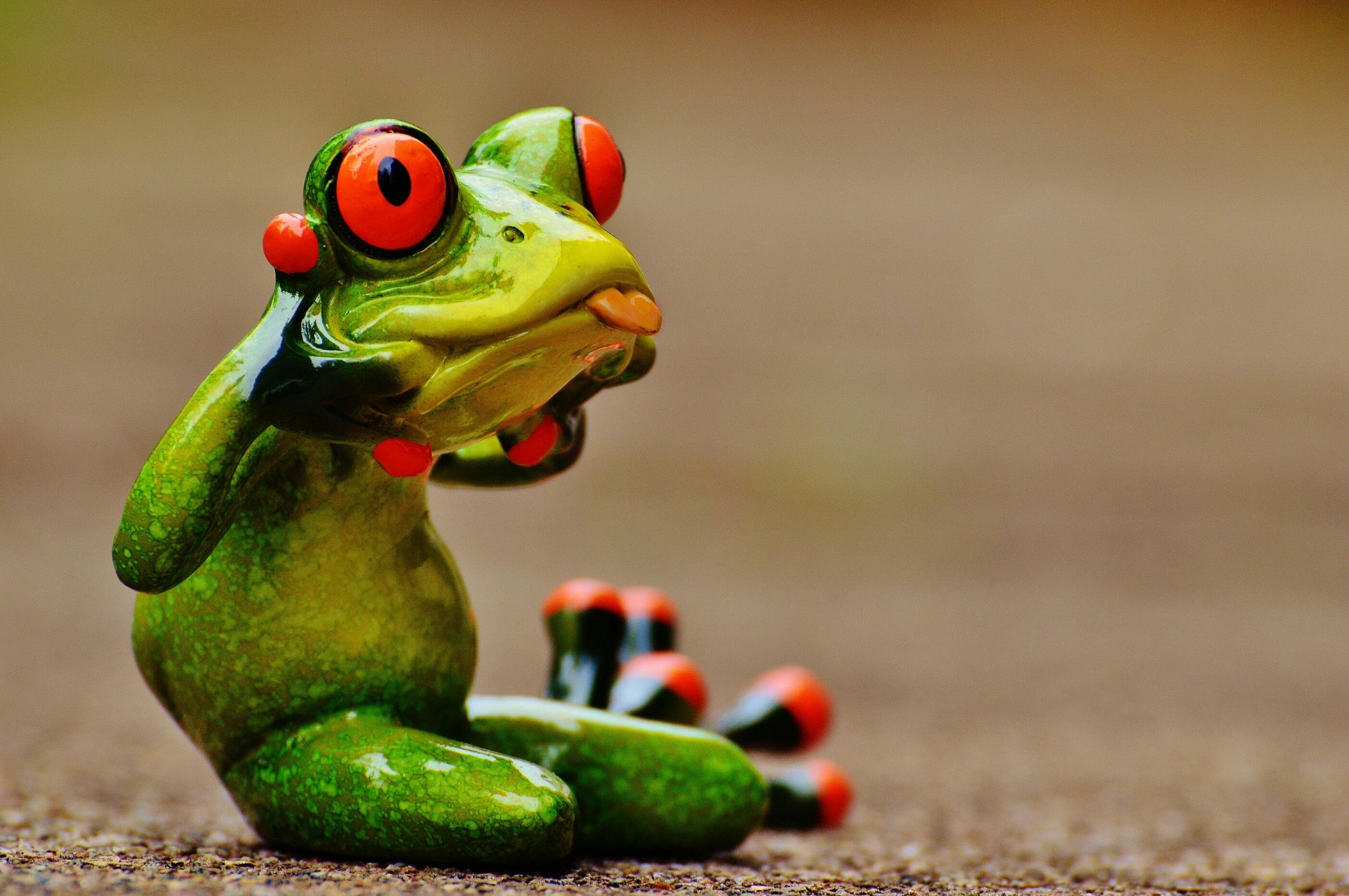 Прикольные картинки про жаб, открытки