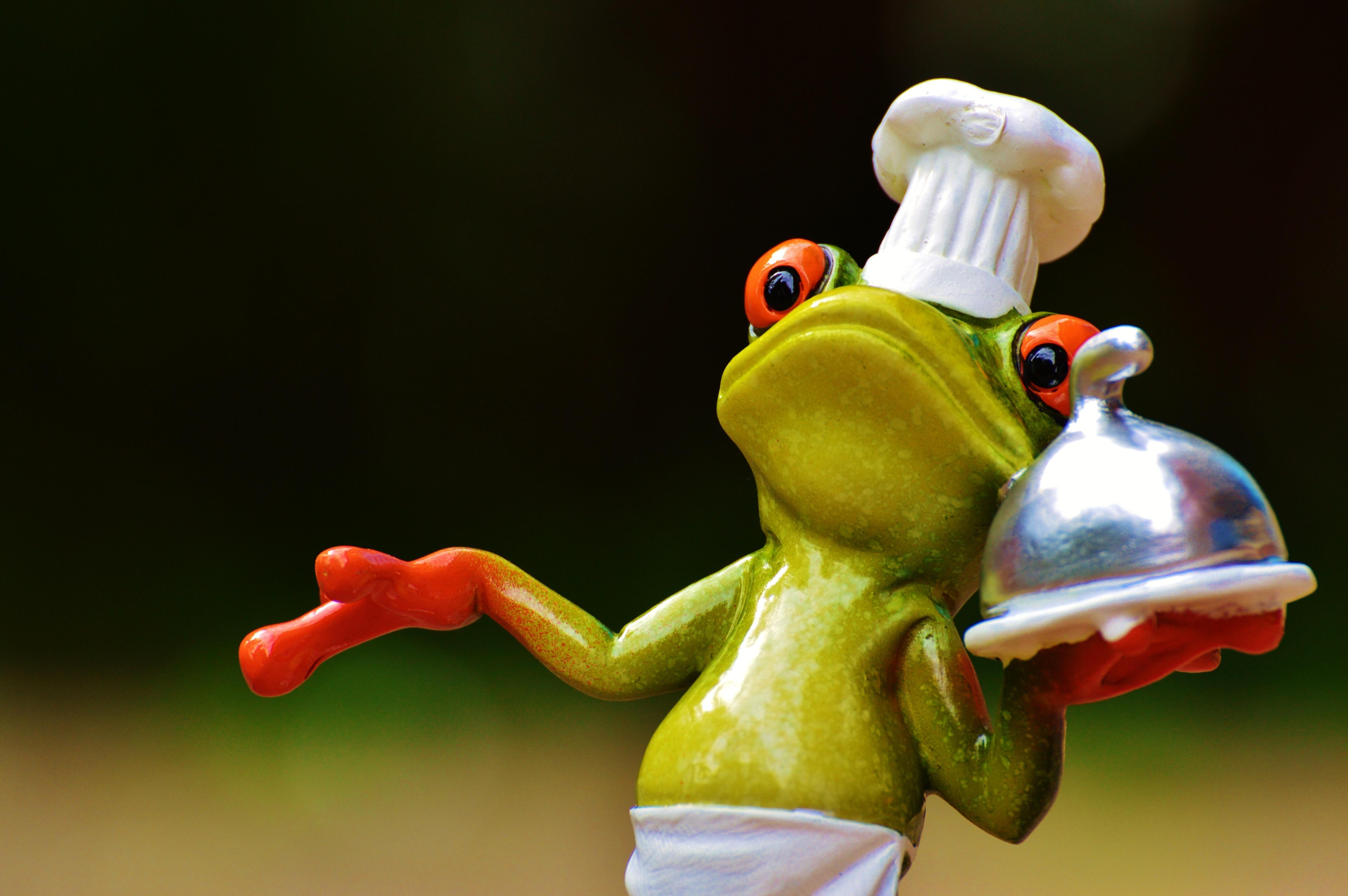 Kostenlose foto : süß, niedlich, Lebensmittel, Grün, Kochen, Küche ...
