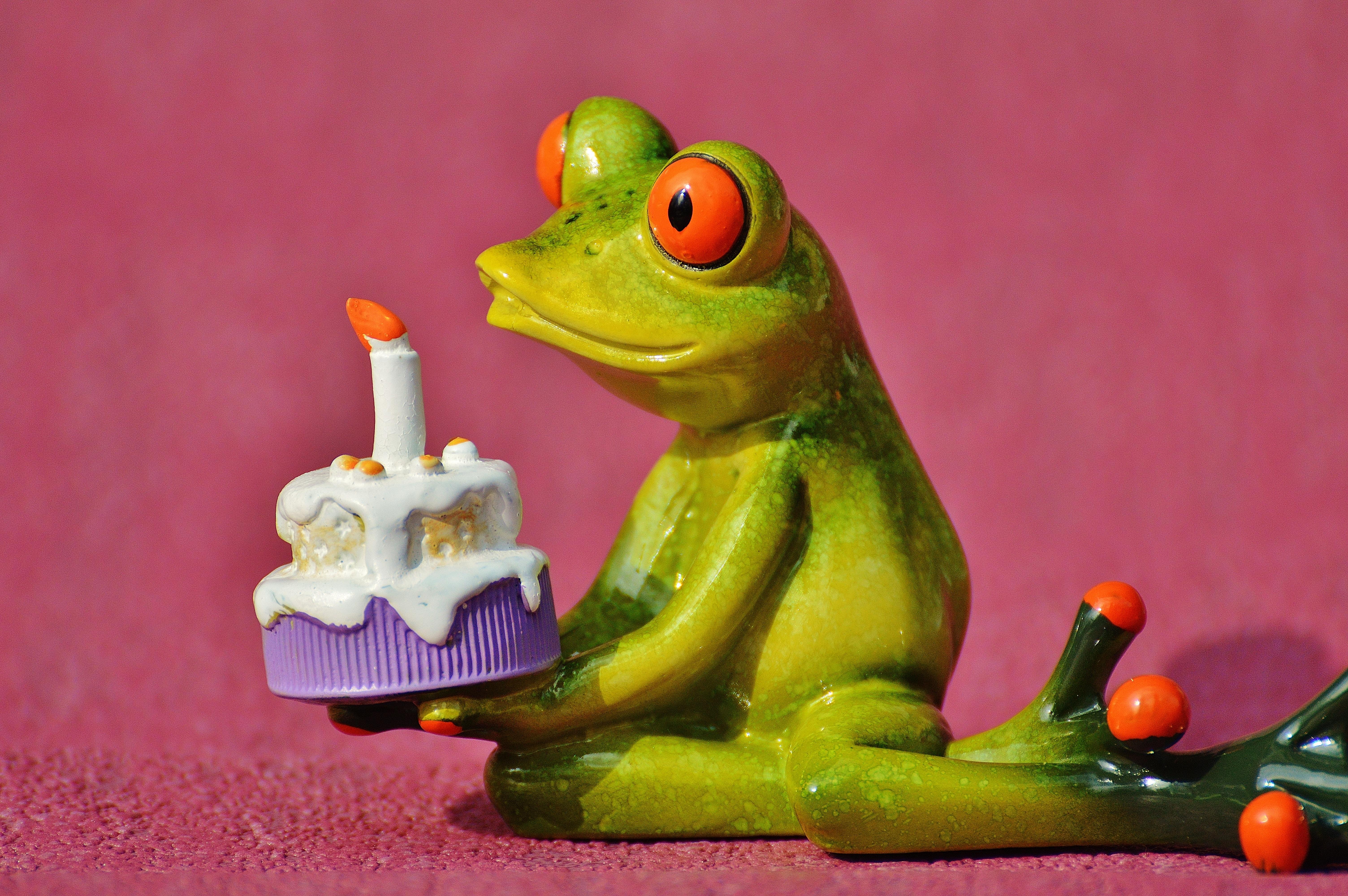 legrační obrázky k narozeninám Free fotobanka : sladký, roztomilý, zelená, žába, obojživelník  legrační obrázky k narozeninám