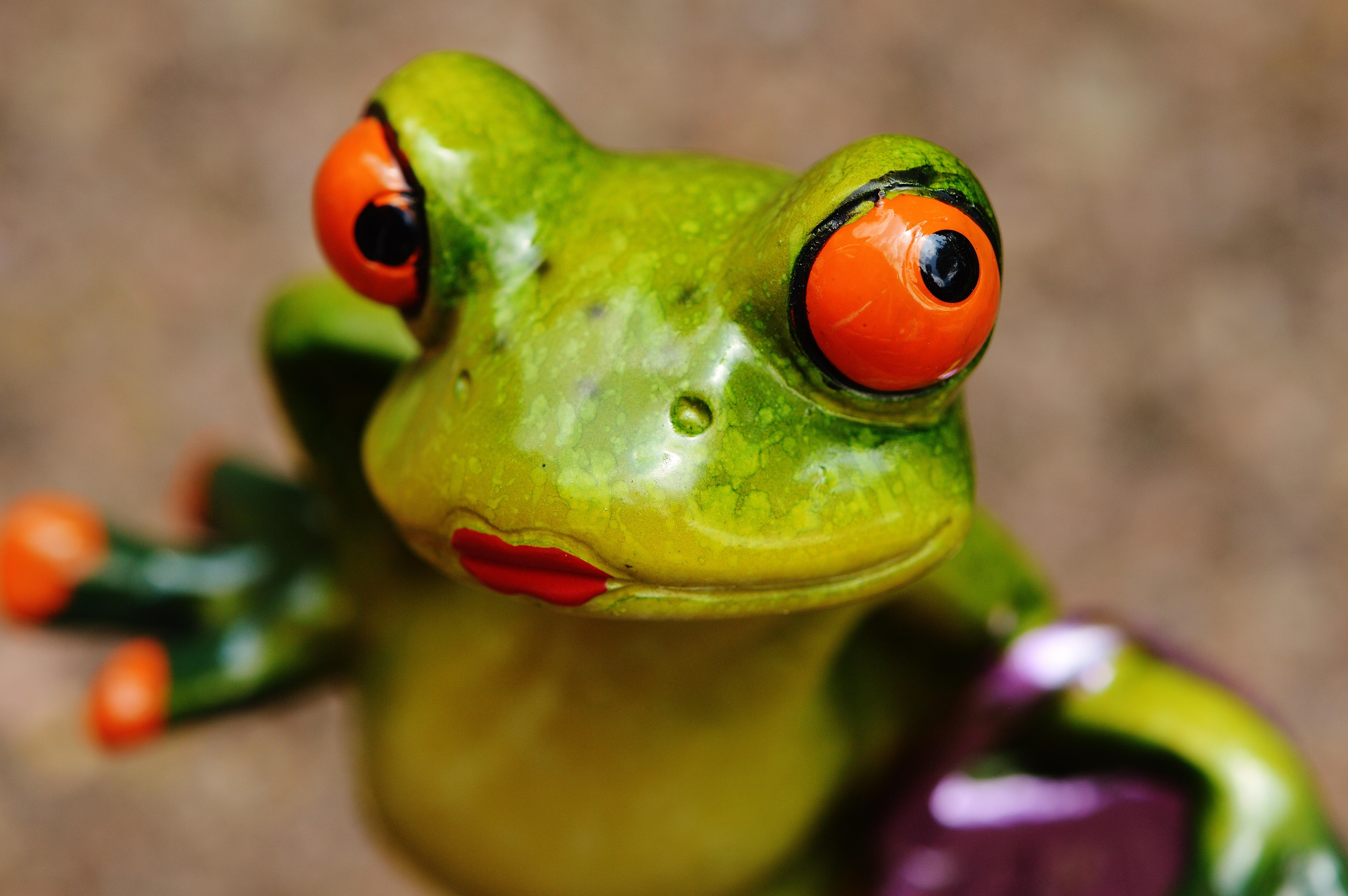 смешные фото с жабами этого произошло