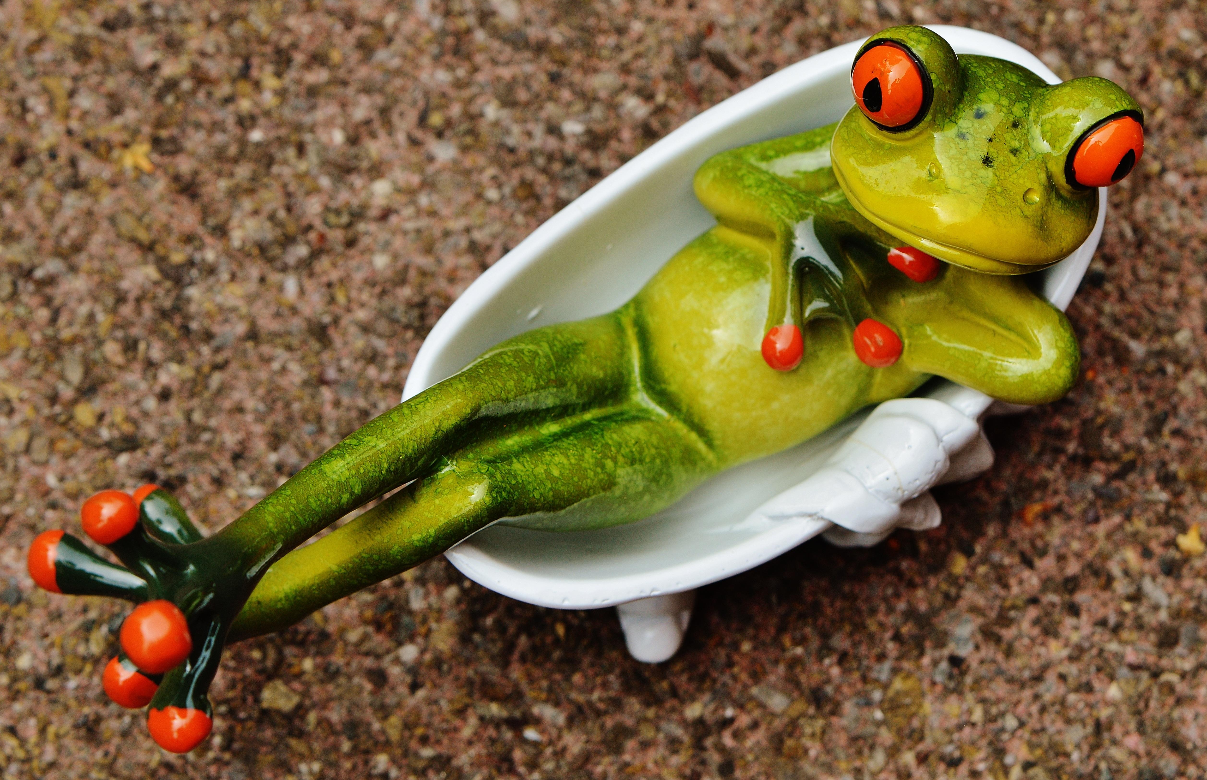 Картинки с прикольными лягушками, открытка