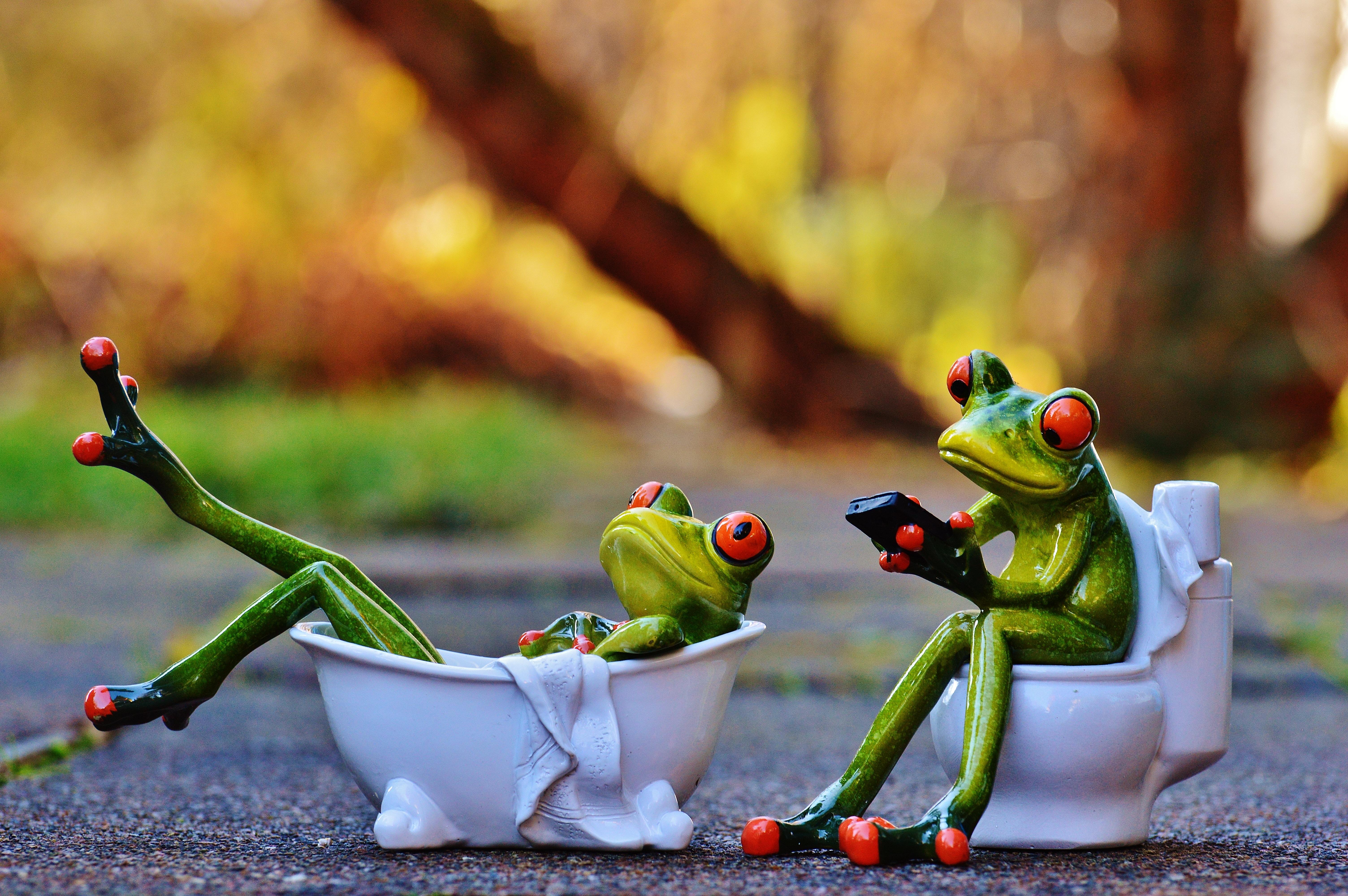 Прикольные картинки с жабами, днем рождения женщинам