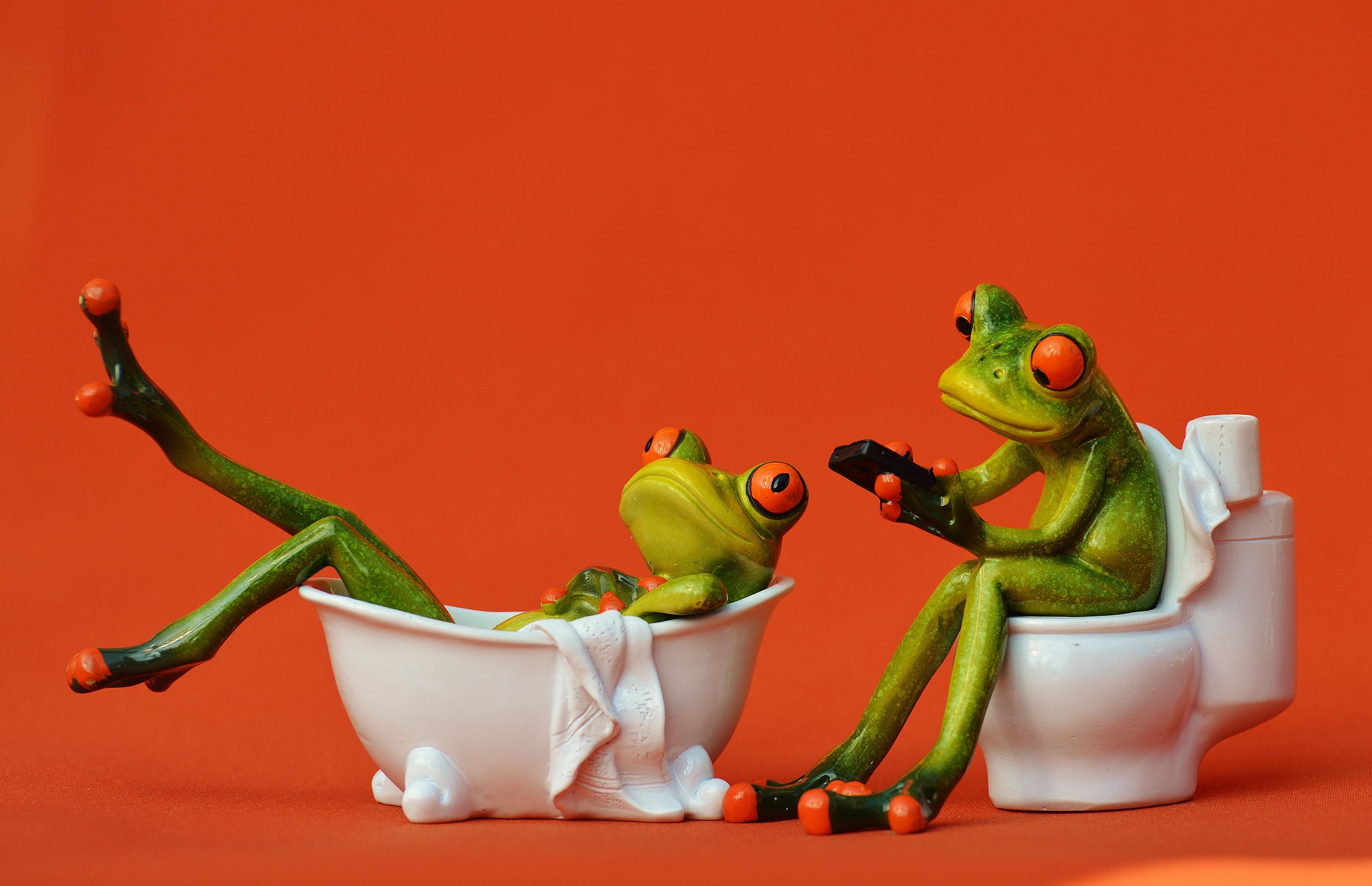 Gambar Manis Imut Berenang Hijau Toilet Katak Amfibi