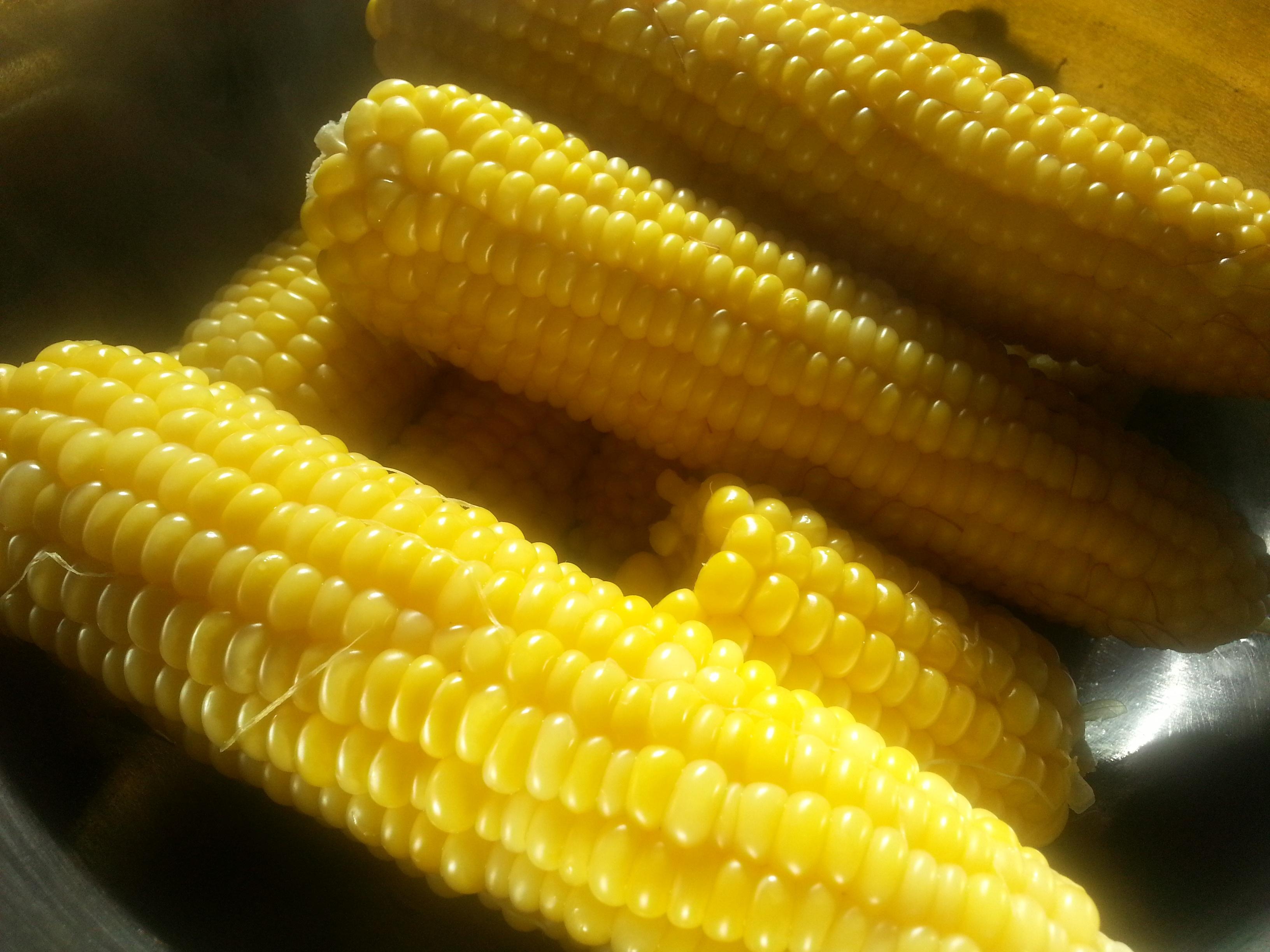Free Images : produce, vegetable, crop, cuisine, sweetcorn