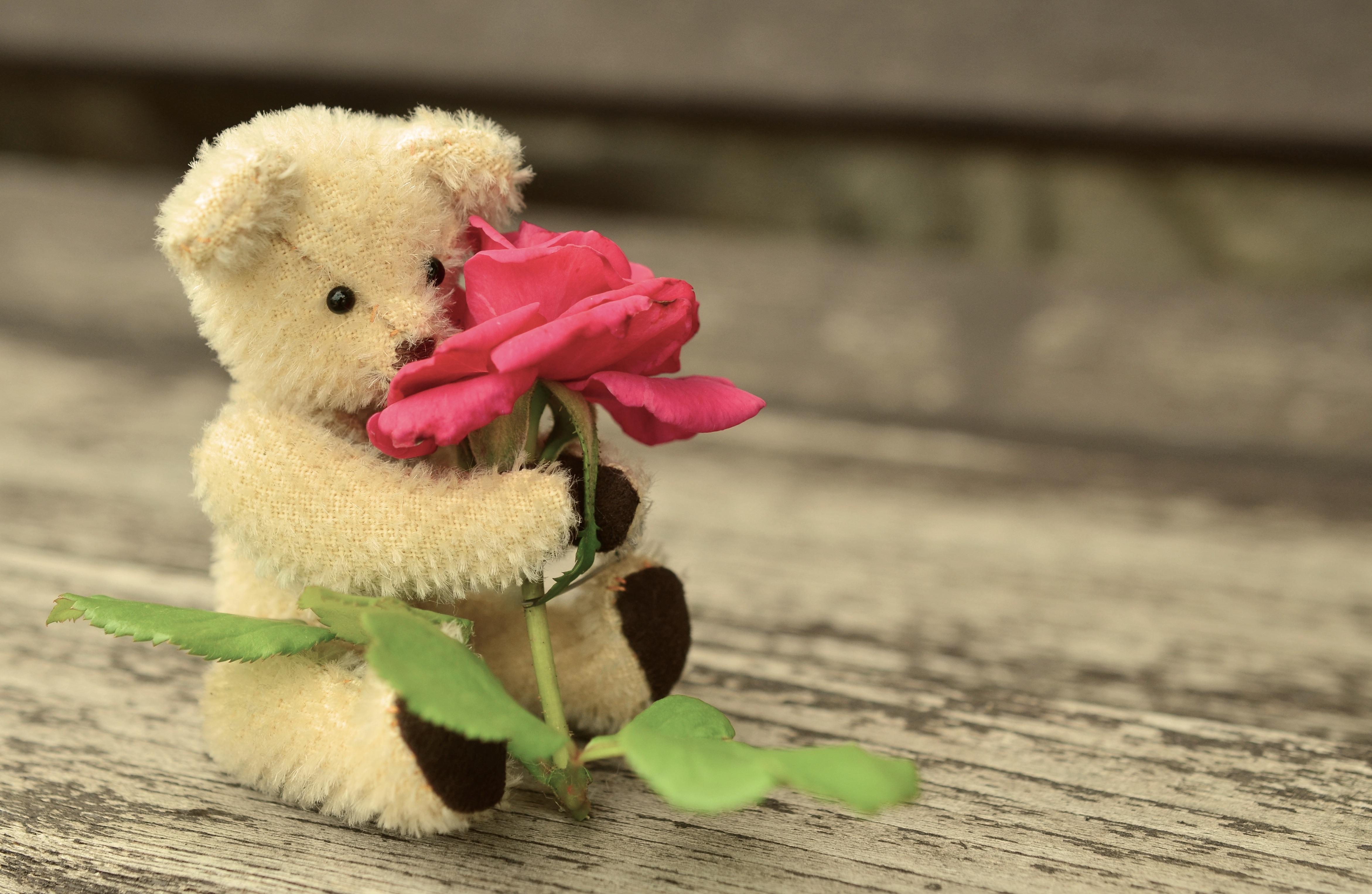 Gambar Manis Bunga Suasana Imut Cinta Mawar Percintaan