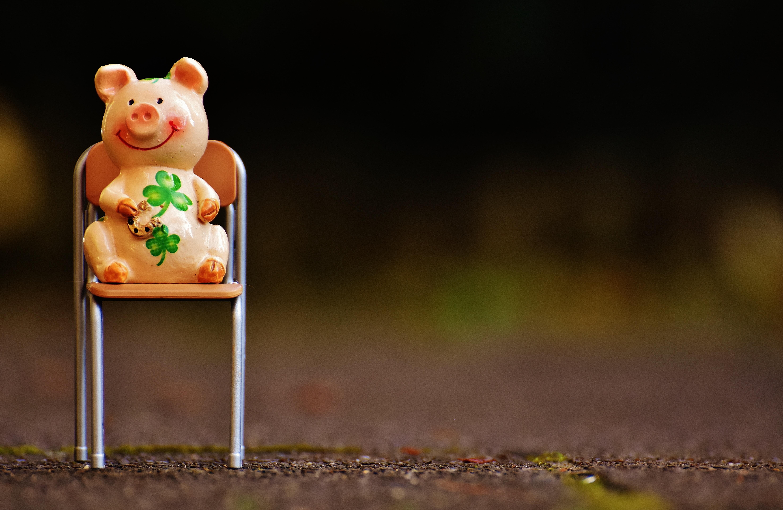 kostenlose foto s blume sessel tier niedlich gr n. Black Bedroom Furniture Sets. Home Design Ideas