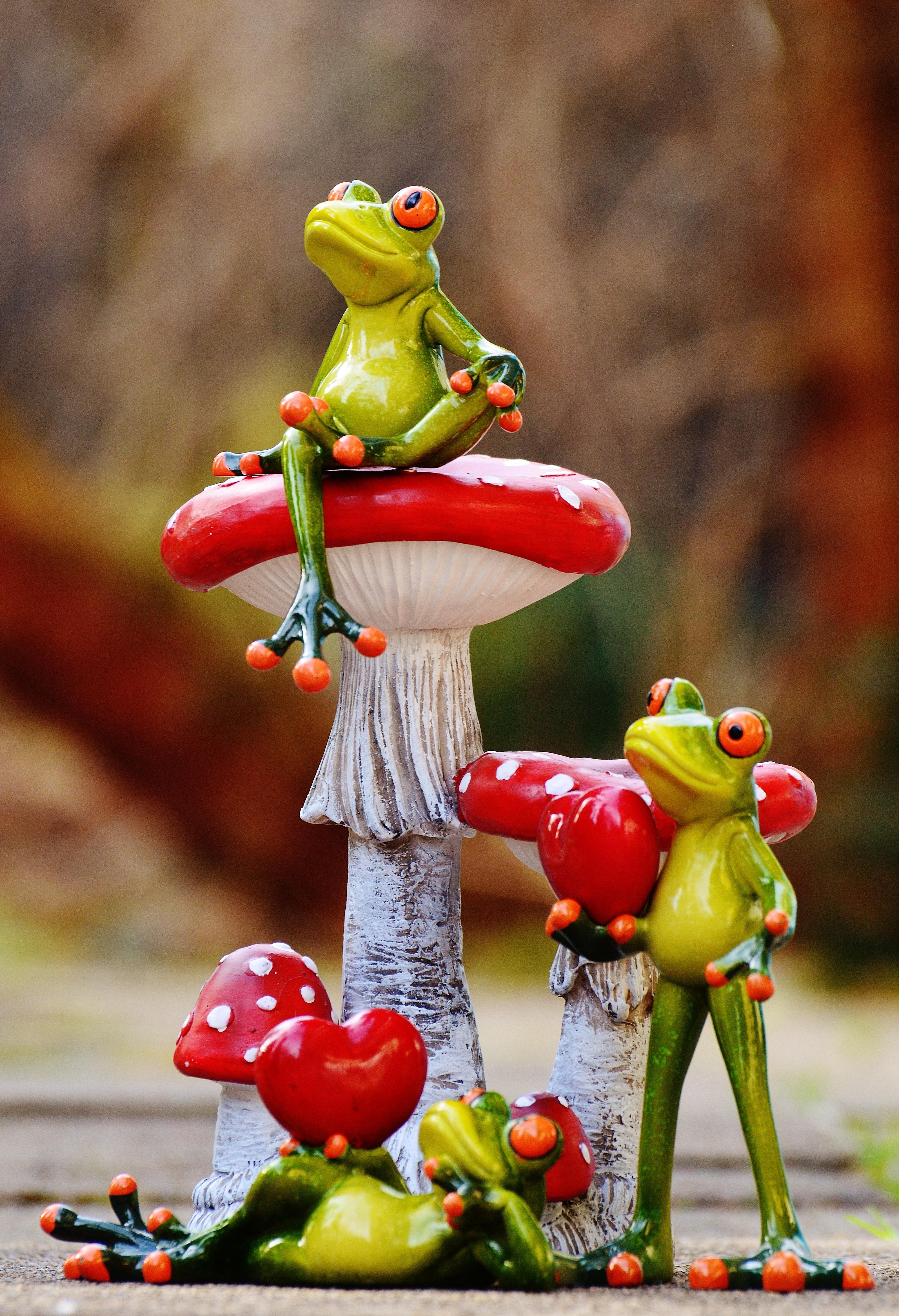 Images gratuites doux fleur mignonne amour c ur vert rouge couleur couple grenouille - Images coeur gratuites ...
