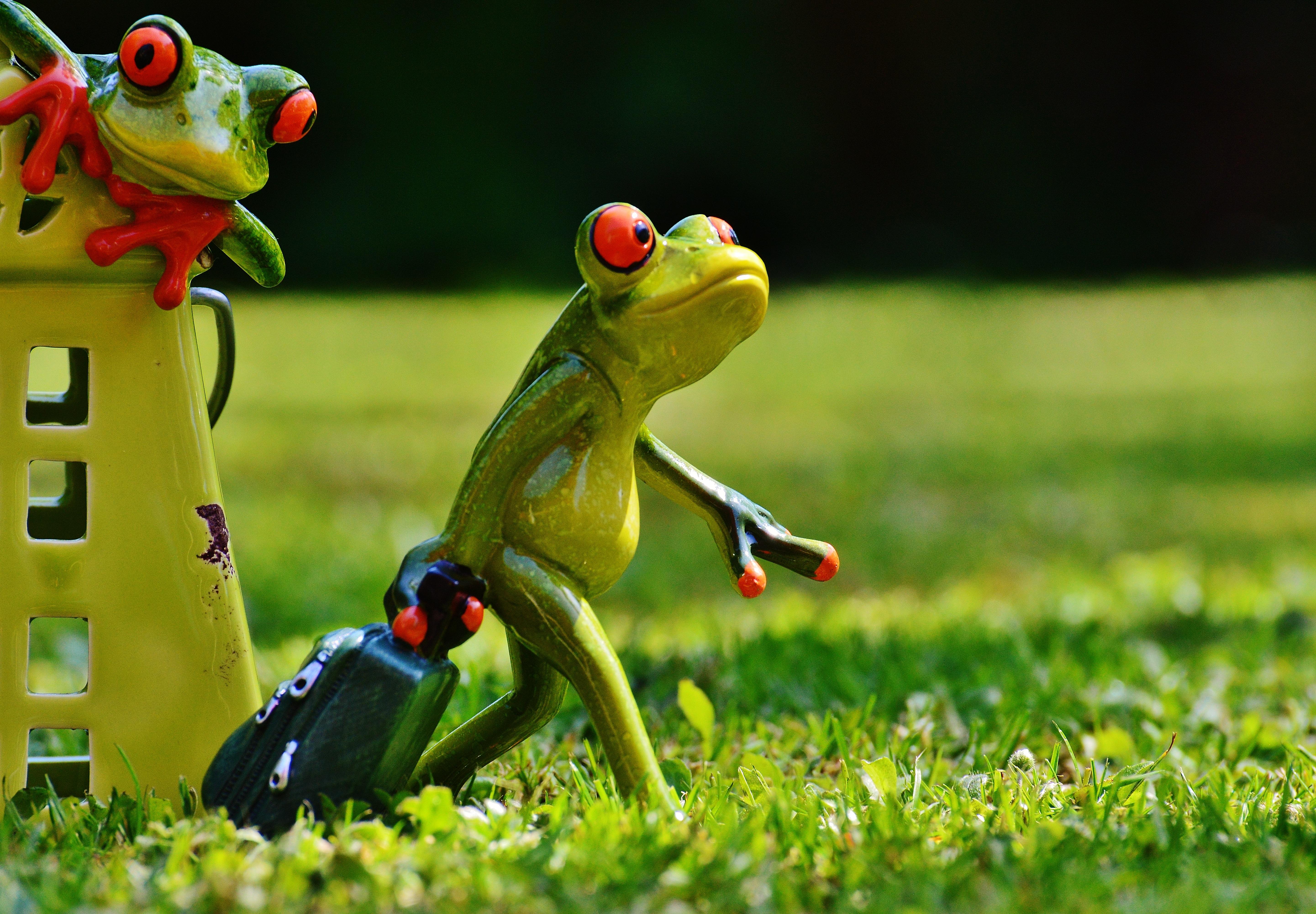 Прикольные картинки с жабами