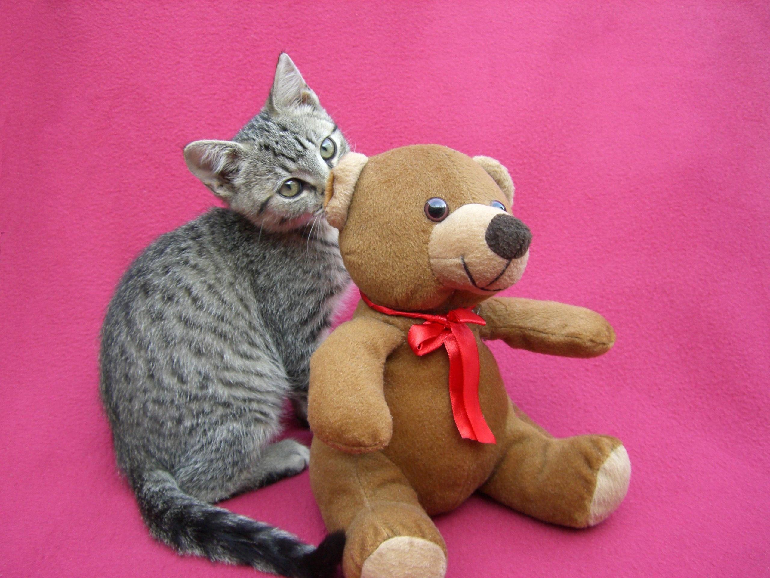 Kostenlose foto : süß, Suchen, Jung, Kätzchen, Katze, katzenartig ...
