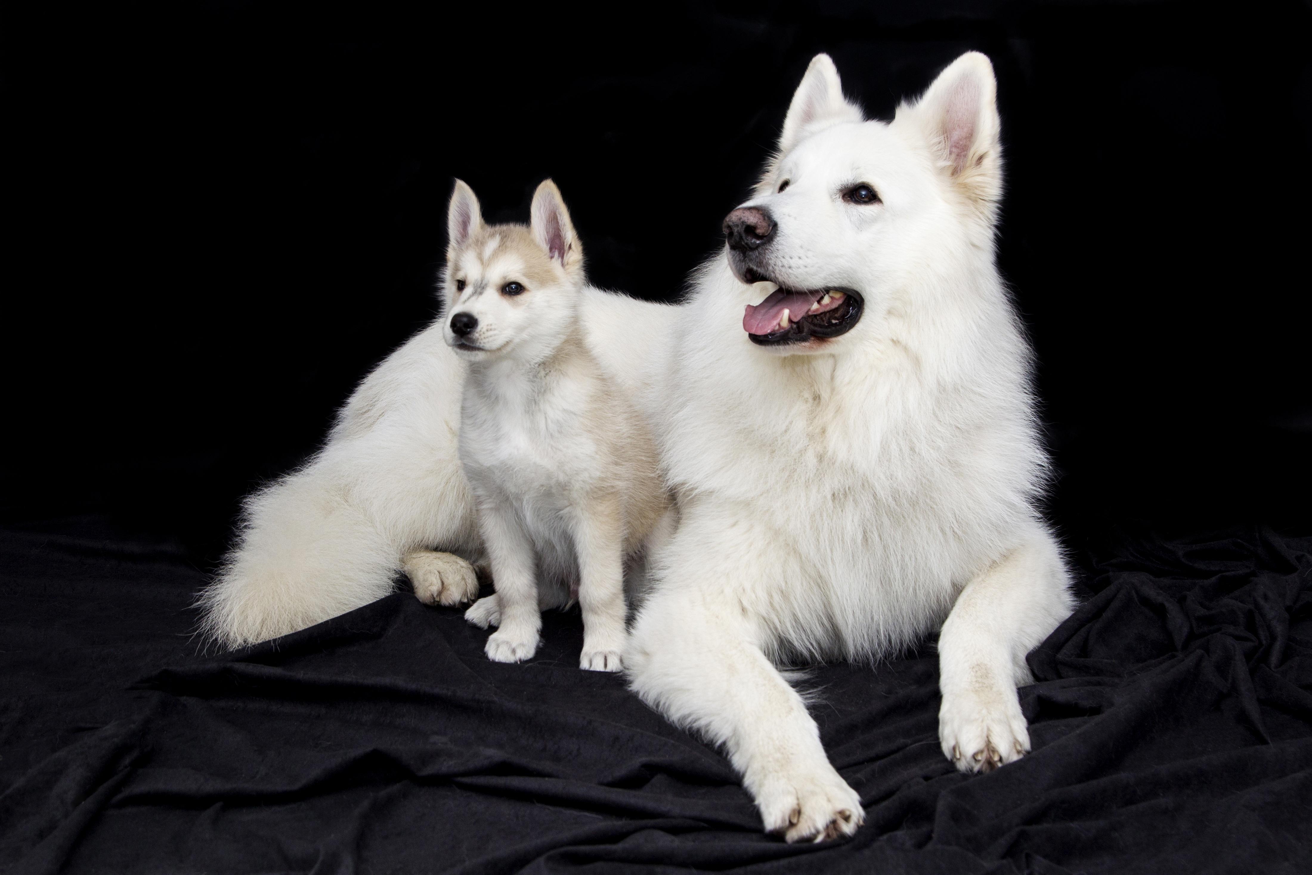 Immagini Belle Dolce Cucciolo Carina Animale Domestico Cani