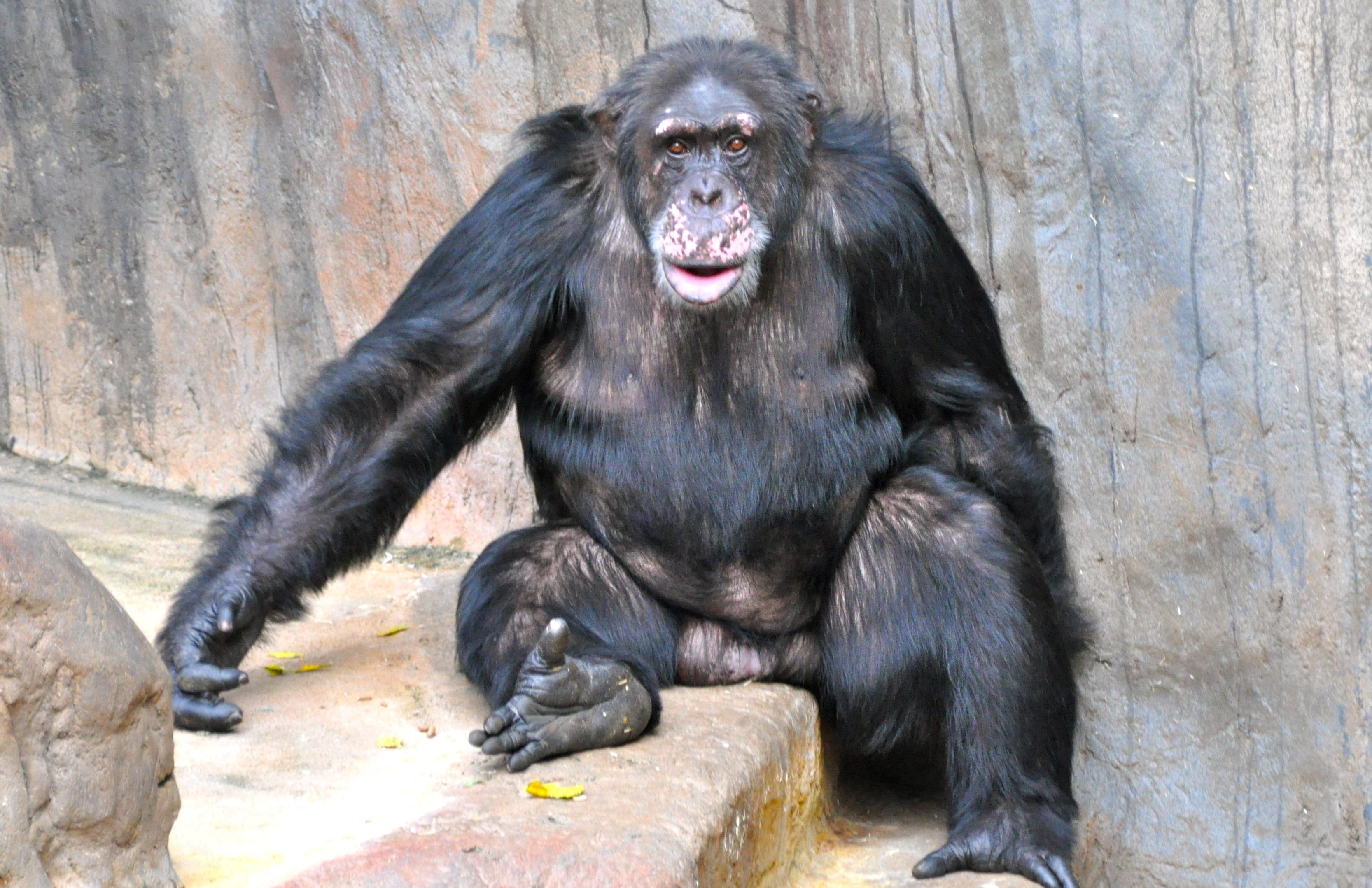 Fotoğraf Tatlı Vahşi Hayat Hayvanat Bahçesi Memeli Maymun