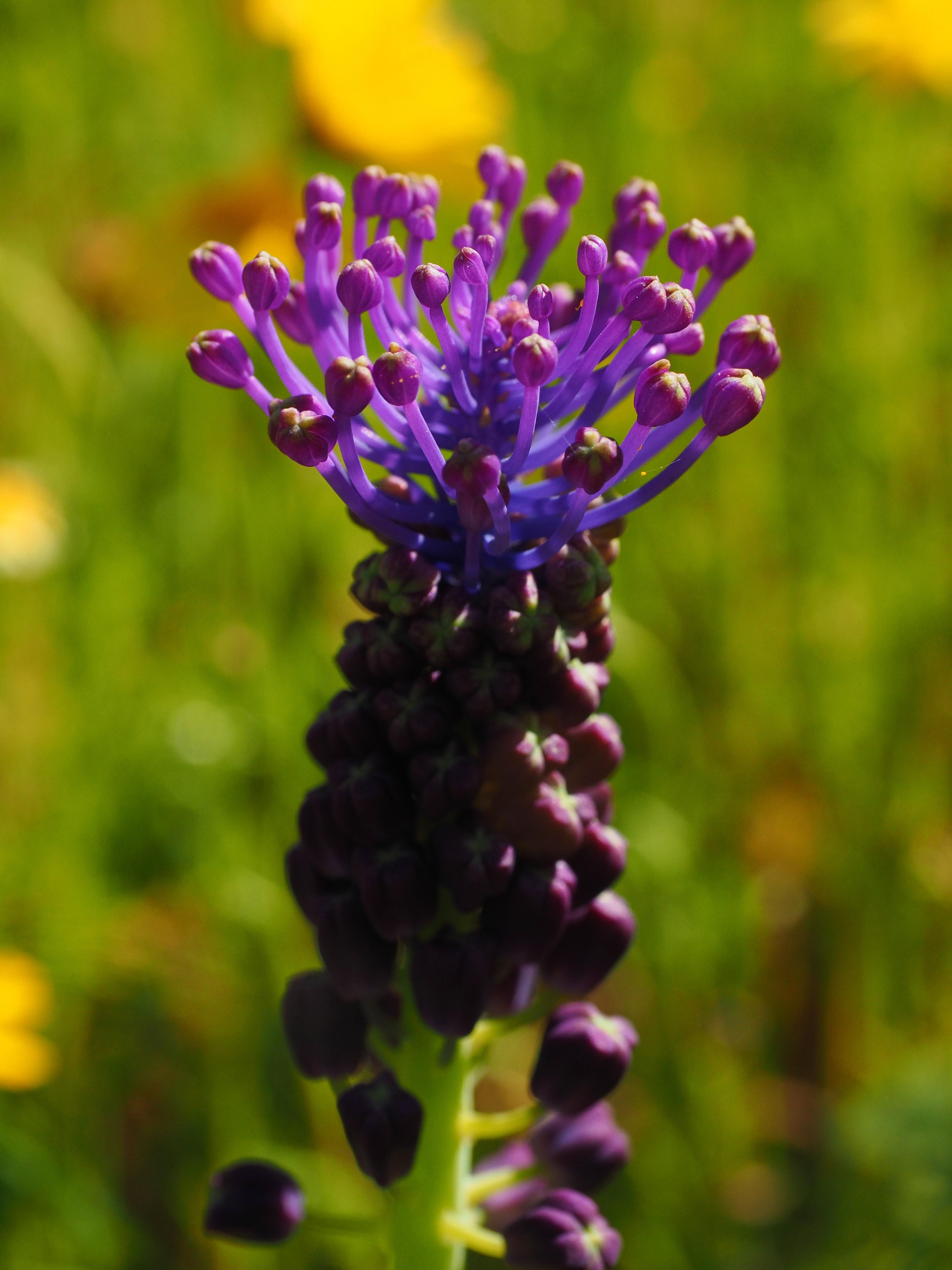 Blumenwiese Englisch kostenlose foto tabelle blühen wiese botanik flora