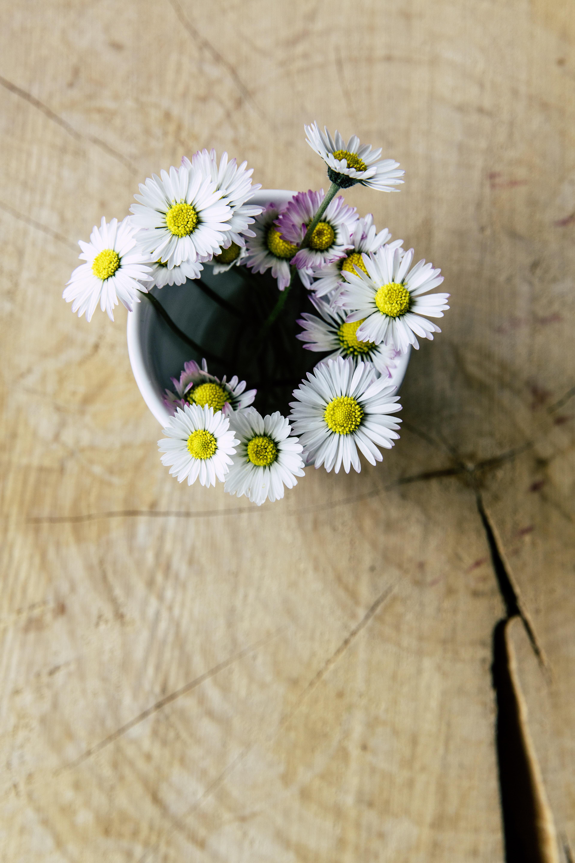 Gambar Meja Mekar Menanam Kayu Putih Daun Bunga Bunga Aster Hadiah Vas Kapal Kuning Dekat Flora Deco Bunga Bunga Merapatkan Dekoratif Bunga Liar Budidaya Bunga Kehidupan Negara Tanaman Berbunga Hari Ibu Keluarga