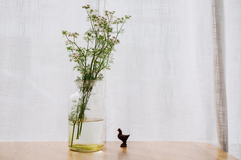 plante interieur morte