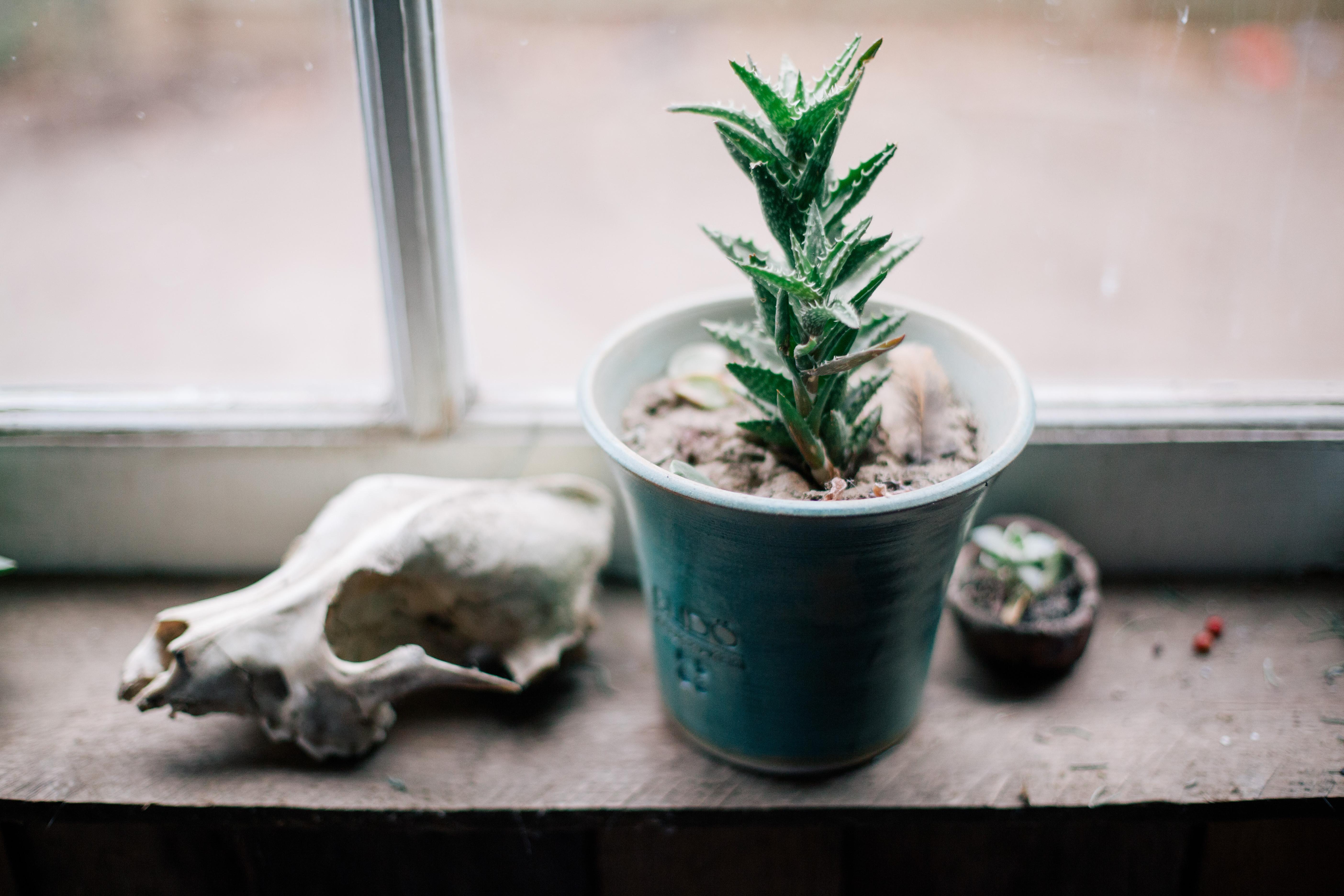 Cactus In Glass