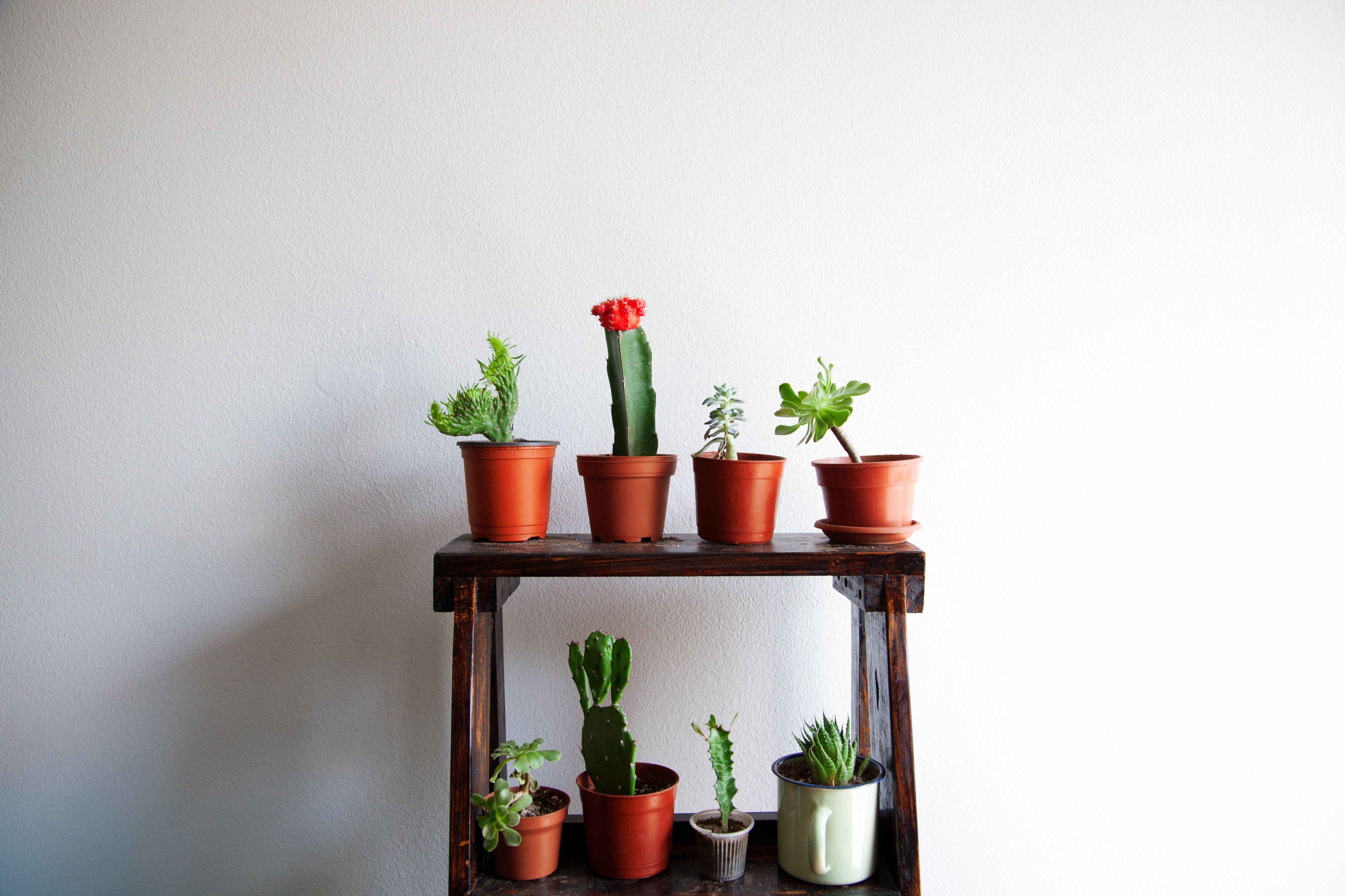 Fotos gratis : mesa, cactus, flor, verde, rojo, interior, estante ...