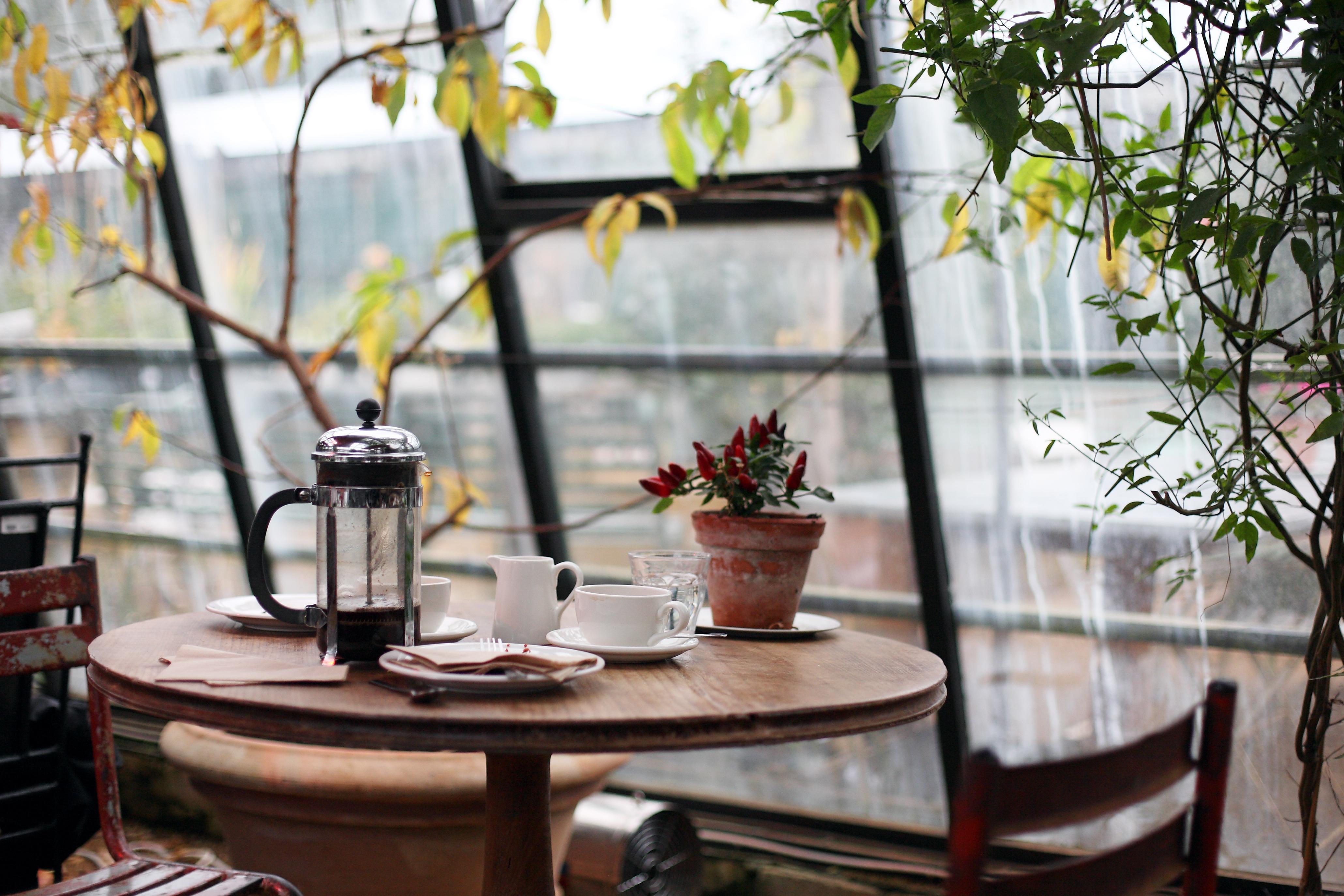 Gratis billeder : tabel, cafe, kaffe, blomst, restaurant, hjem ...