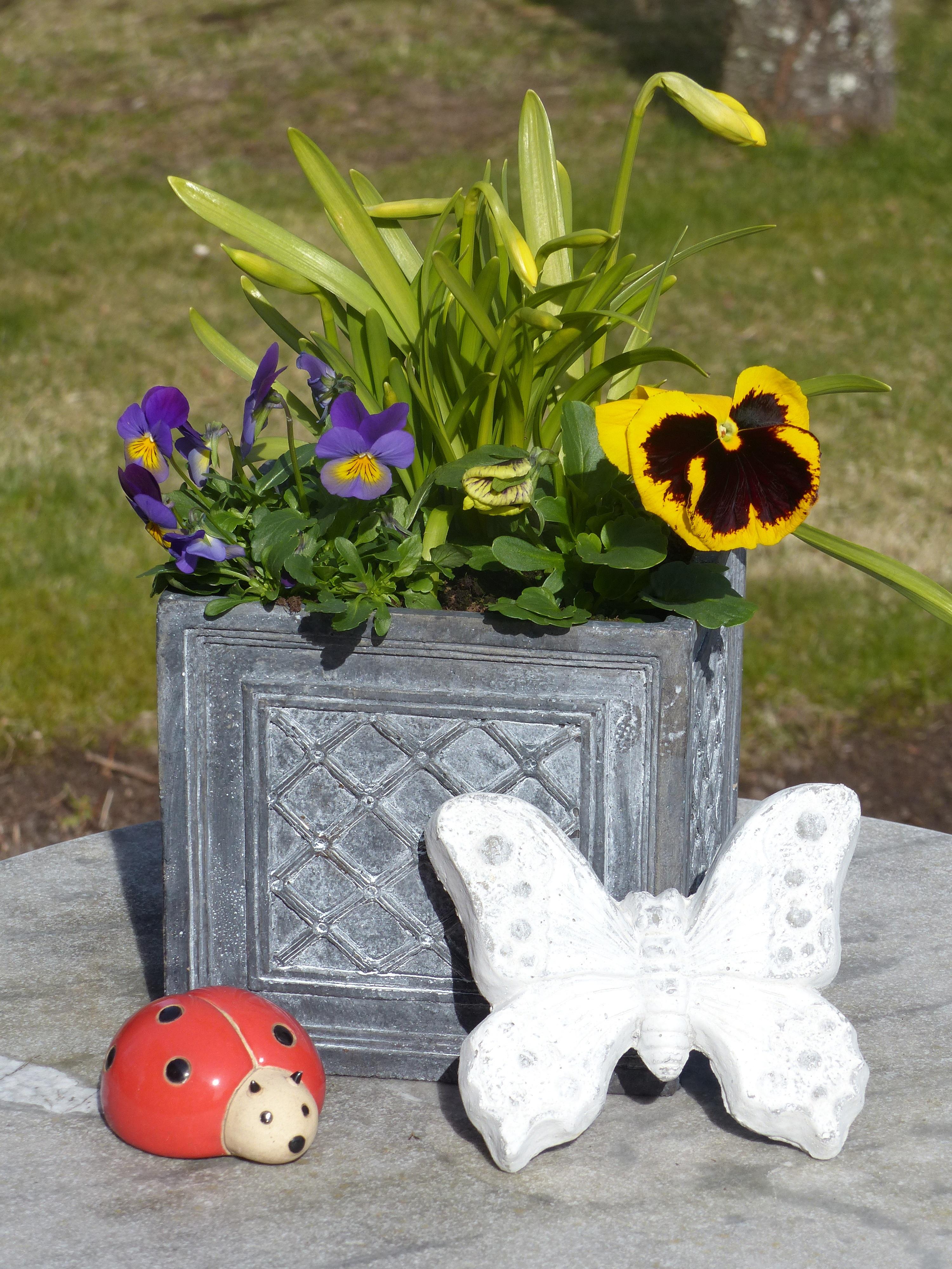 Букет астана букет цветы божья коровка тюльпаны