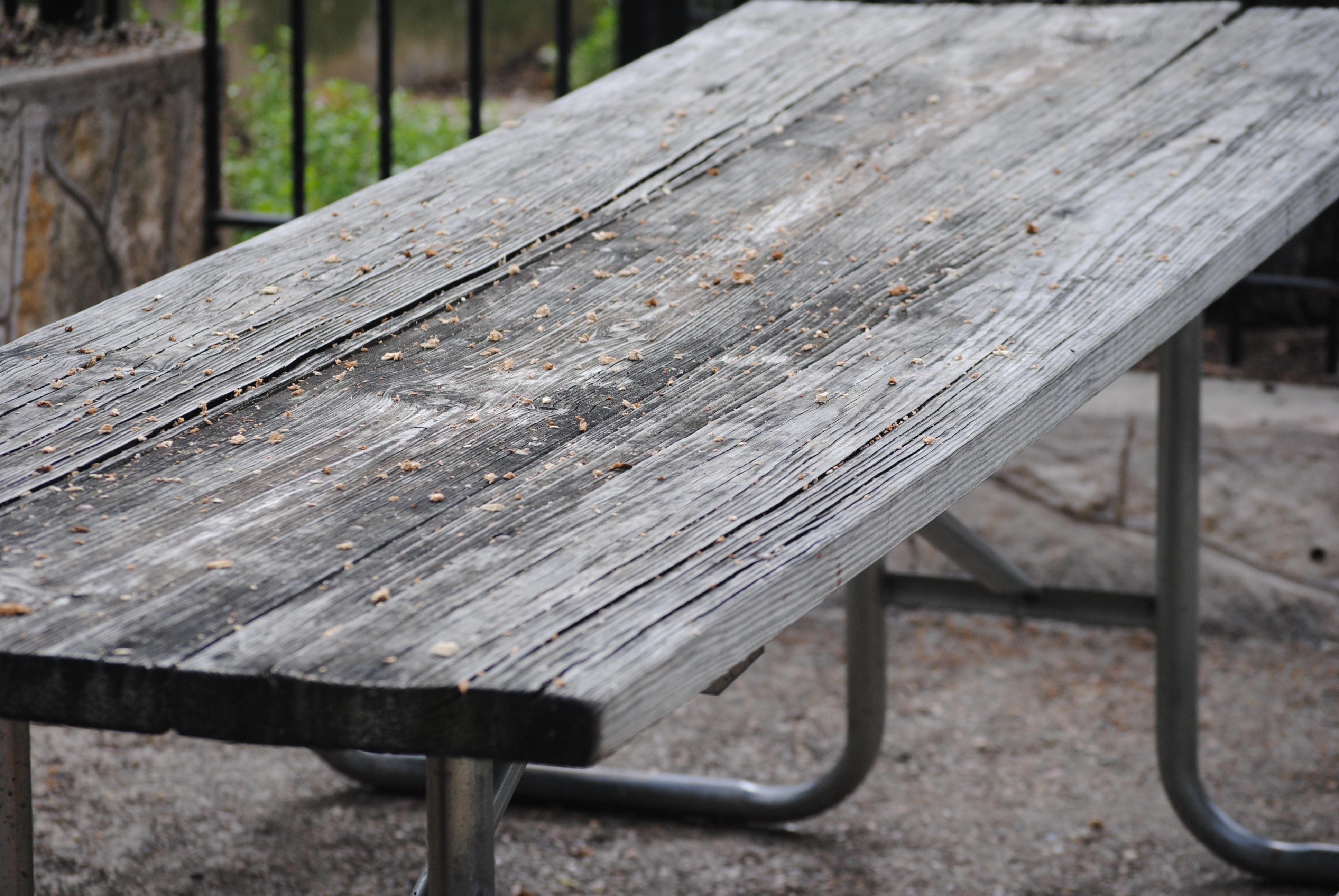 Images Gratuites  table, paysage, arbre, la nature, forêt, herbe, de plein a
