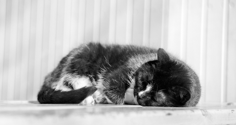 Světle černá kočička