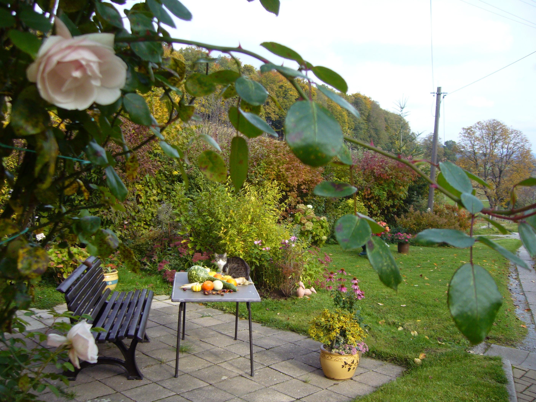 Gratis billeder : tabel, natur, blomst, kat, efterår, baggård ...