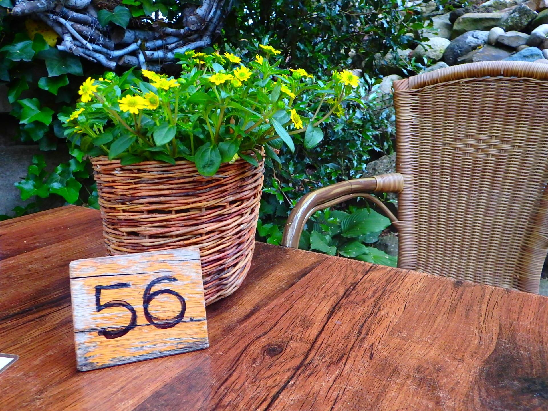 Fotos gratis : mesa, naturaleza, planta, césped, flor, florecer ...