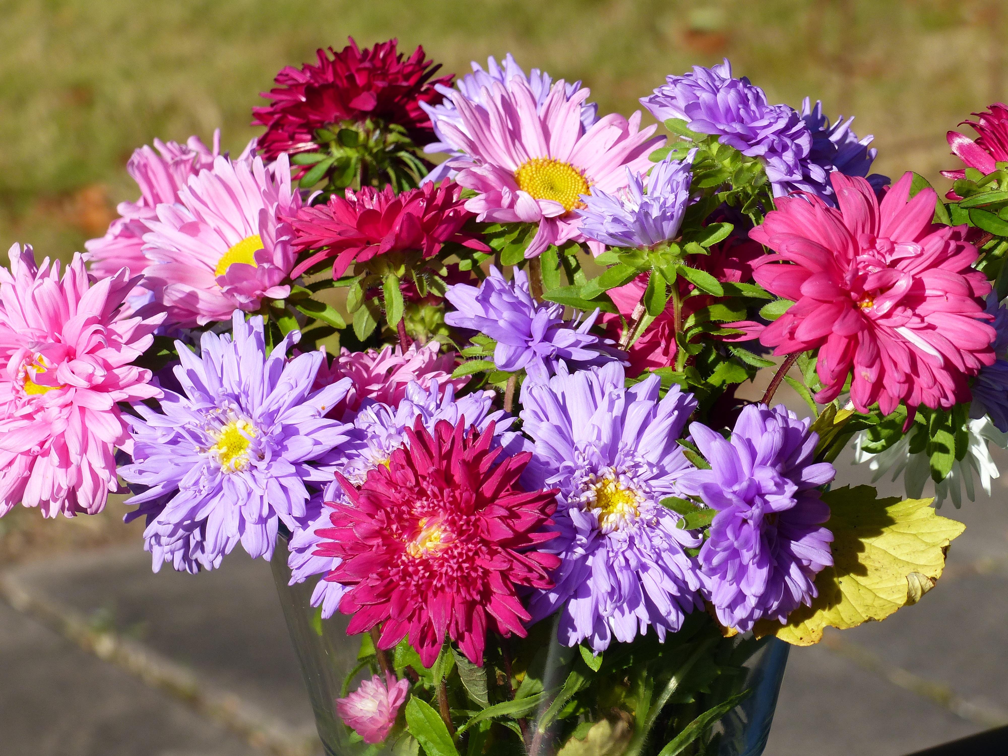 Darmowe Zdjęcia Stół Kwiat Płatek Wazon Jesień Ogród