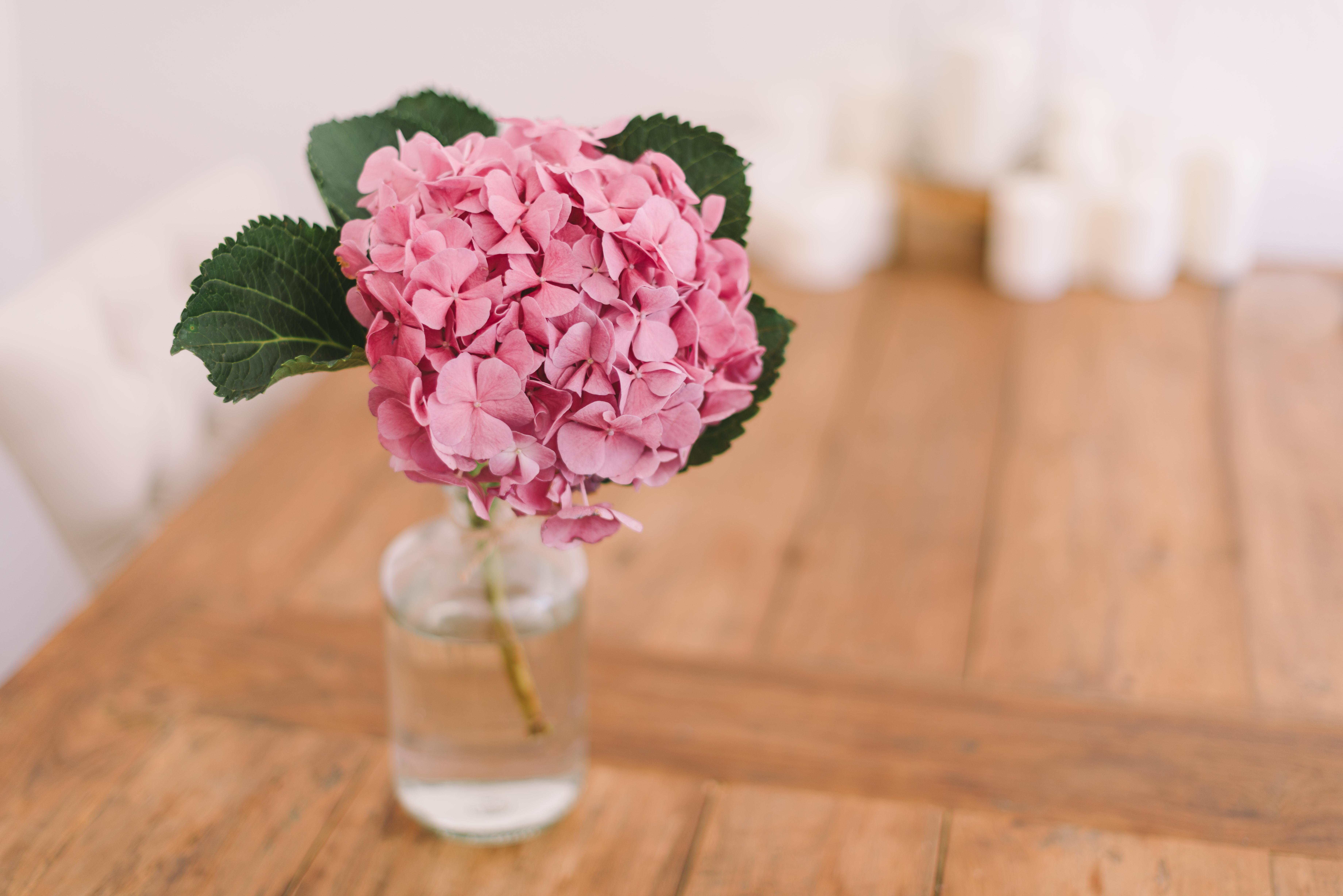 Darmowe Zdjęcia Stół Kwiat Płatek Wazon Różowy
