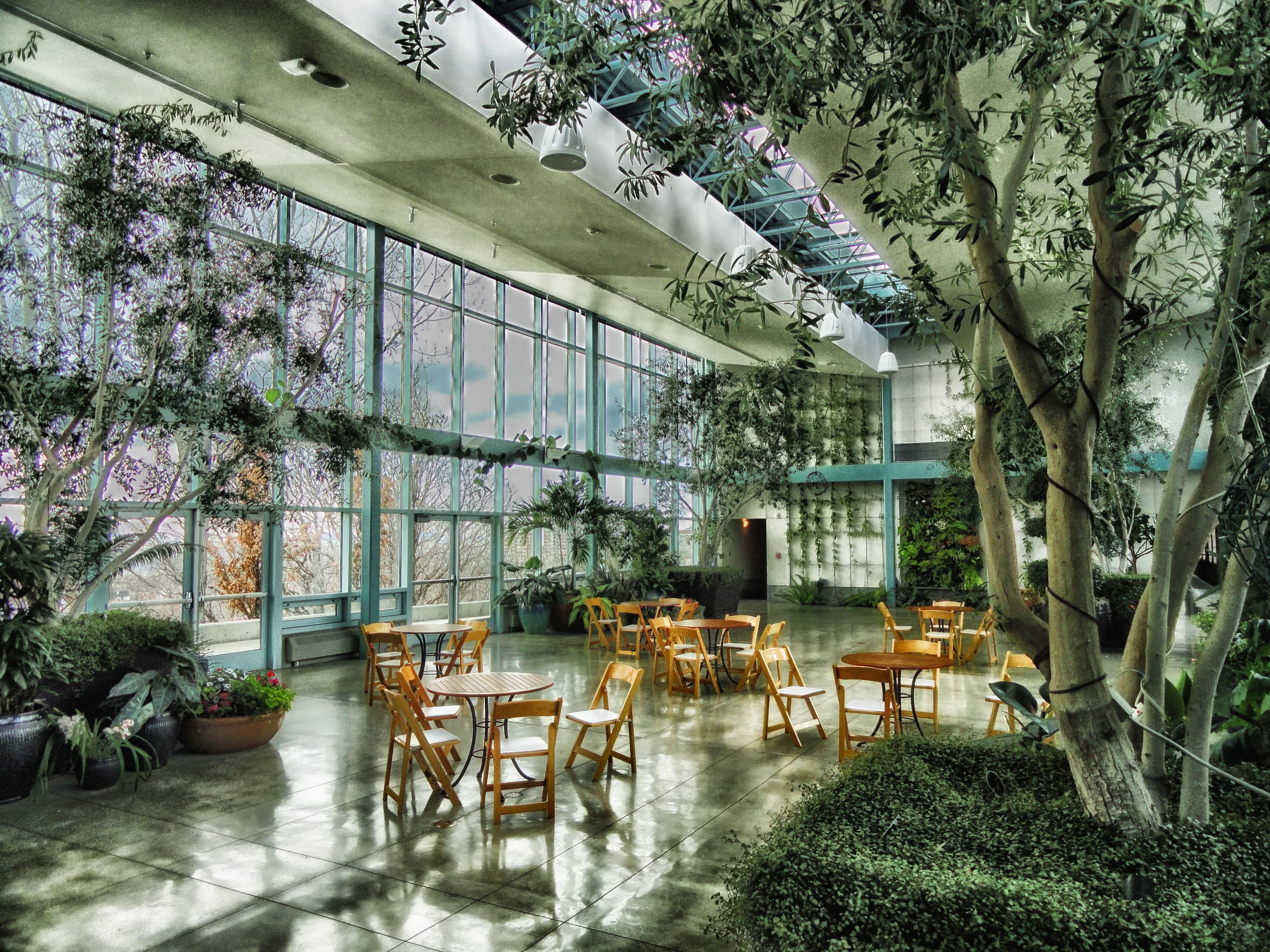 Fotos gratis mesa rbol arquitectura flor vaso for Arbol interior
