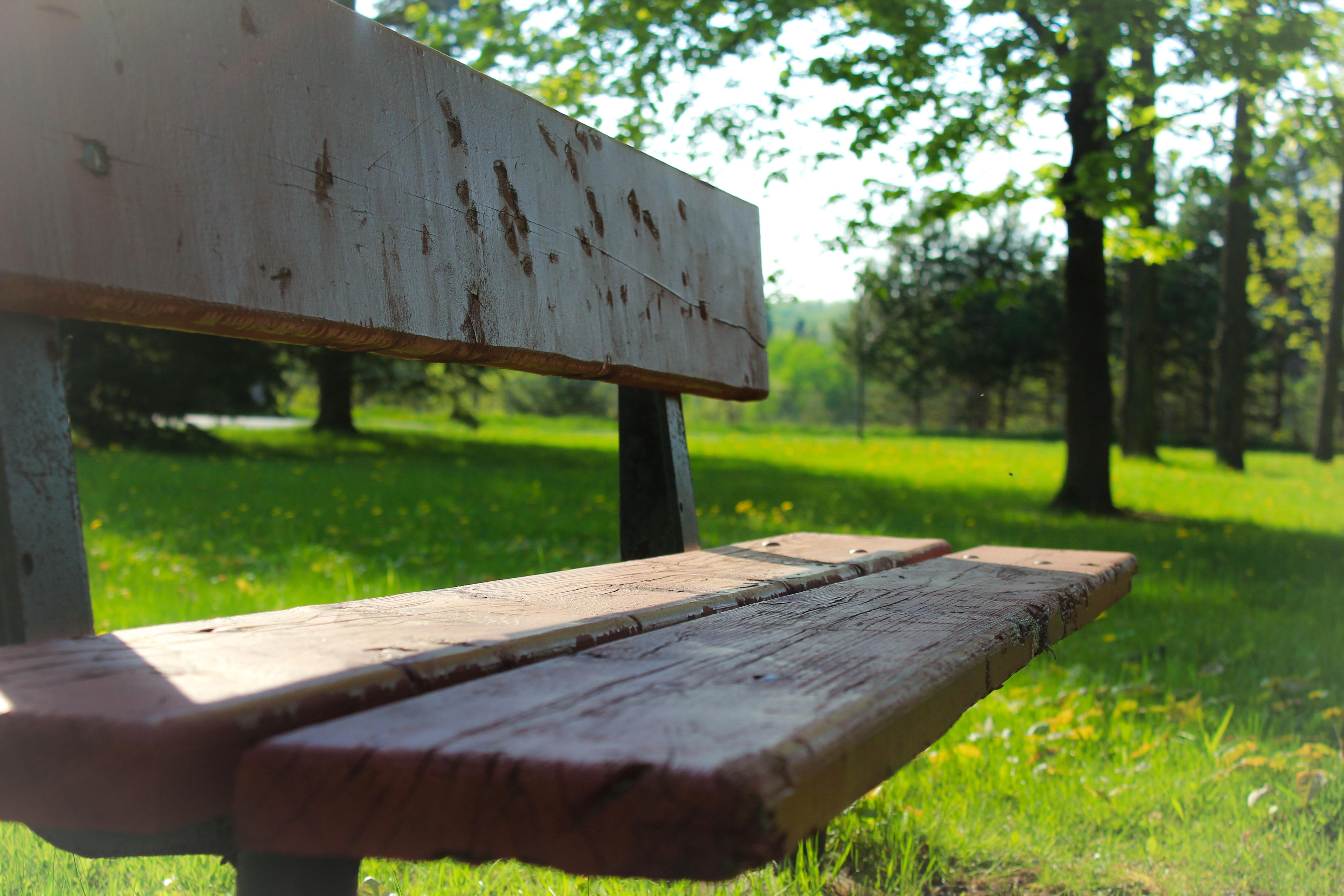 Fotos gratis : mesa, madera, banco, verde, parque, descanso, mueble ...
