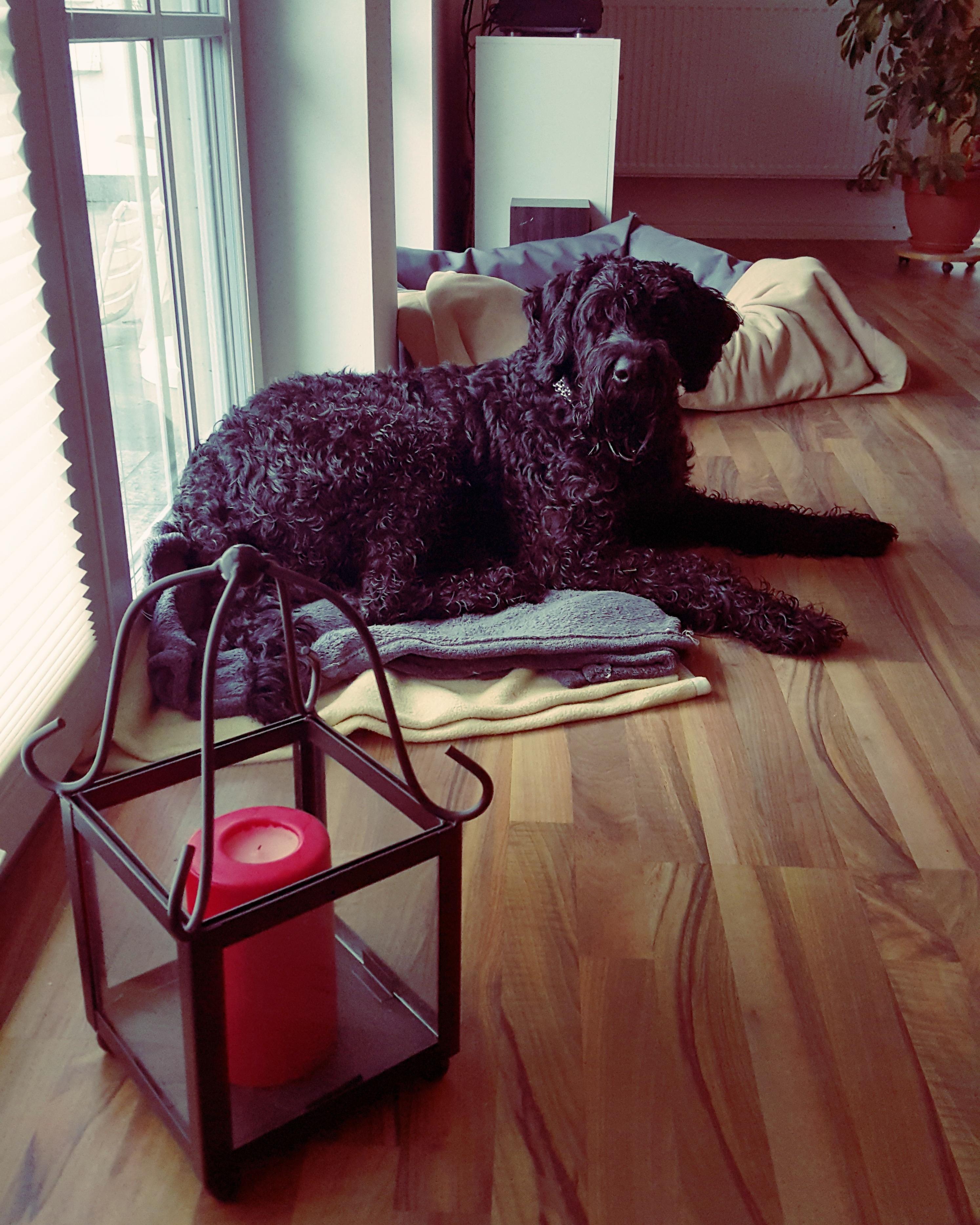 Gambar Meja Kursi Lantai Anjing Ruang Keluarga Hitam Mebel