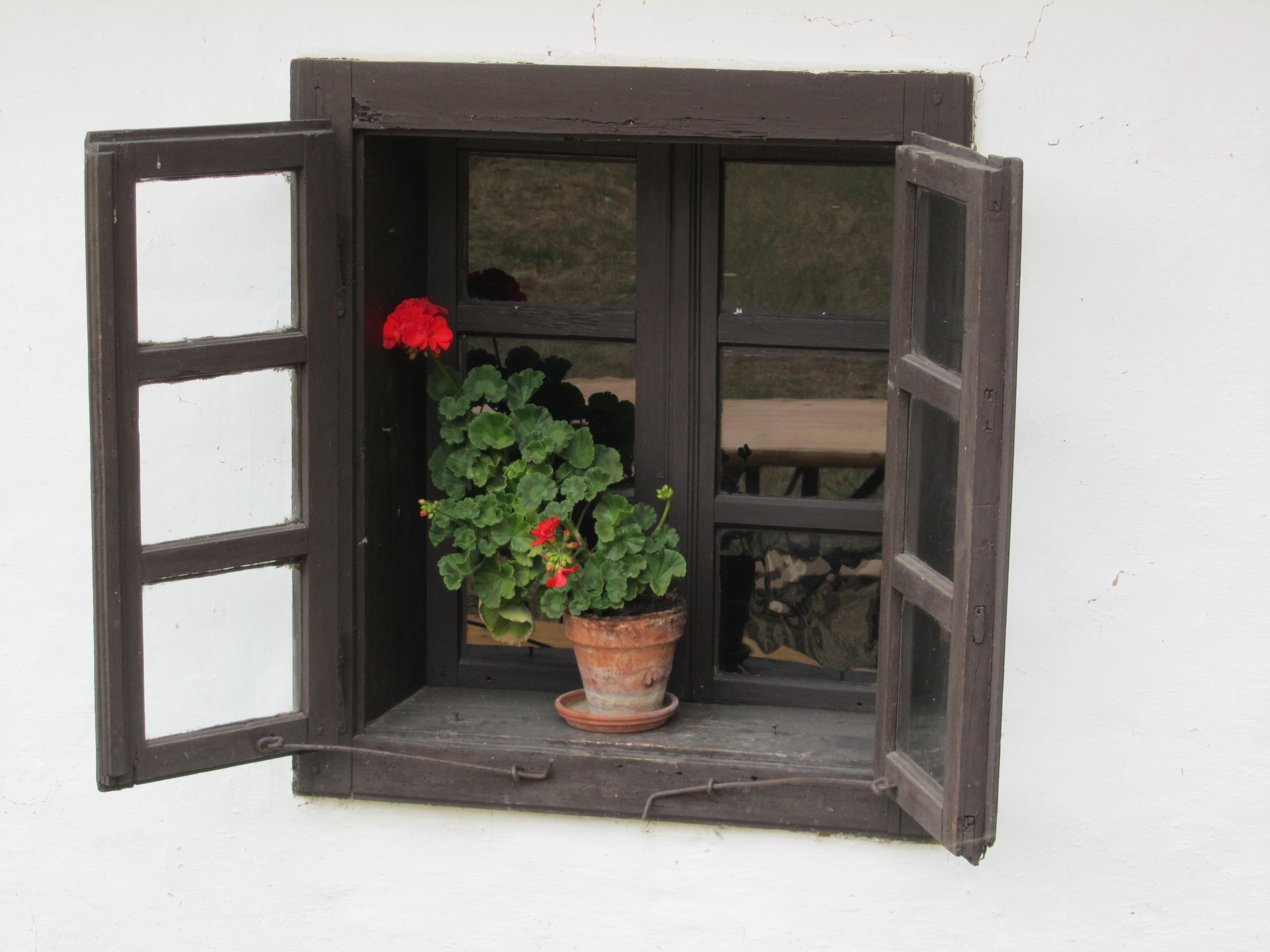 Kostenlose foto : Tabelle, Holz, Fenster, Blumen-, Regal, Möbel ...