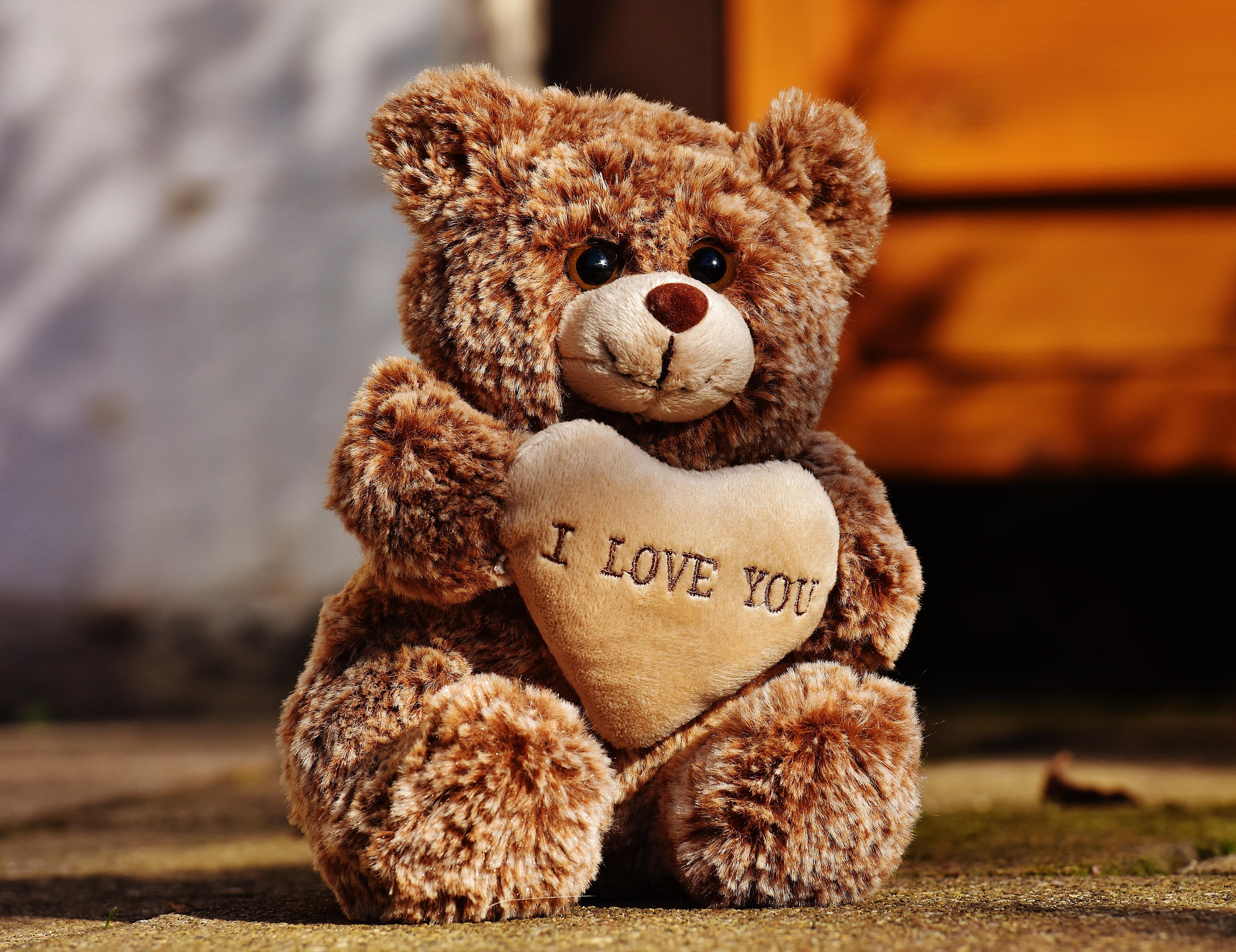 gratis afbeeldingen teddy liefde knuffelbeer pluche zoet bears schattig romantisch. Black Bedroom Furniture Sets. Home Design Ideas