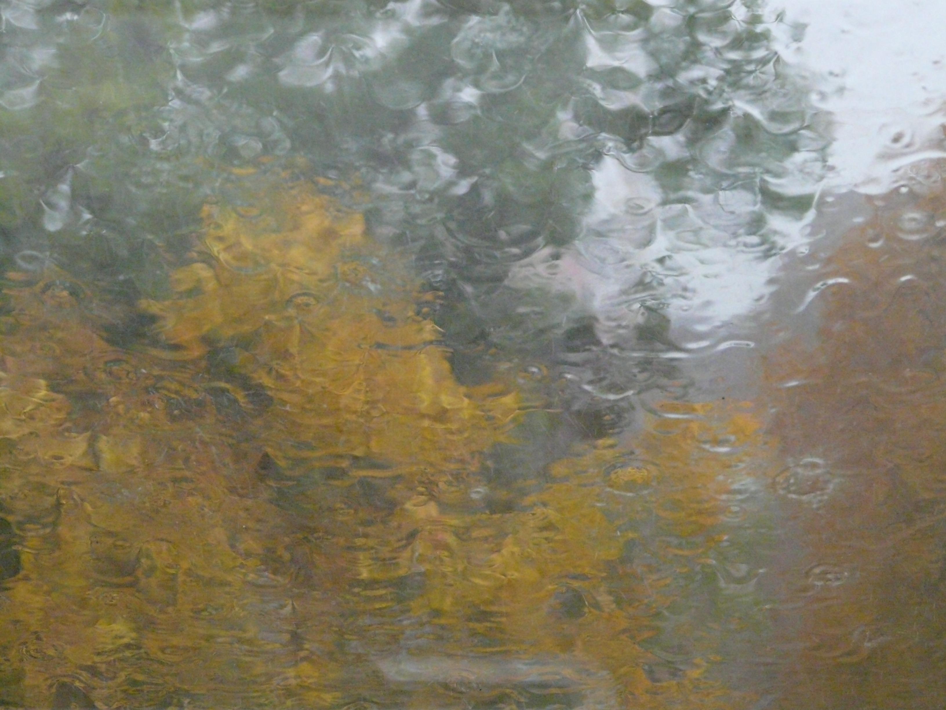 Fotoğraf Doku Yağmur Yaprak Zemin Pencere Bardak çorak