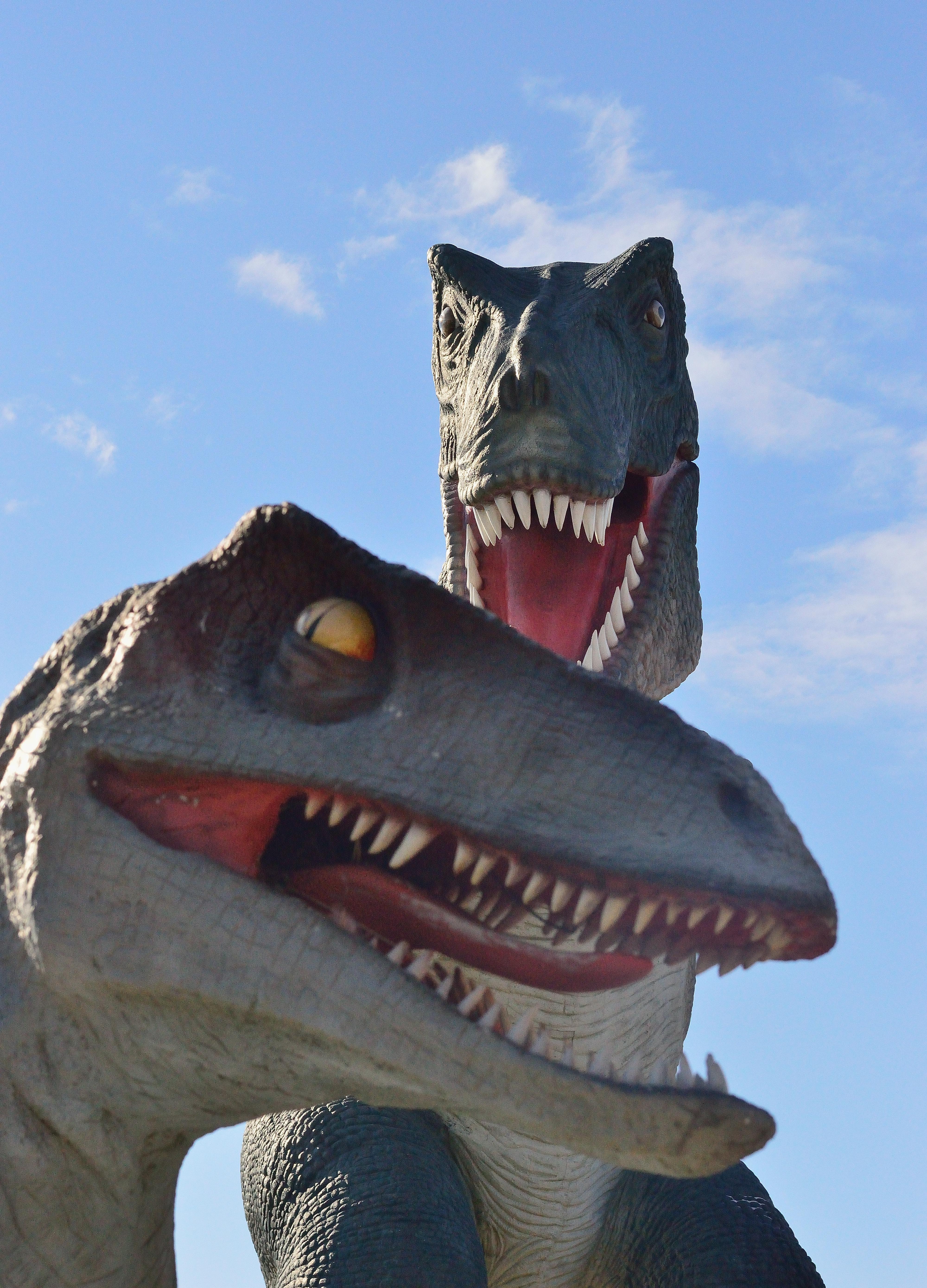 Images gratuites touristique reptile attraction - Dessin dinosaure t rex ...