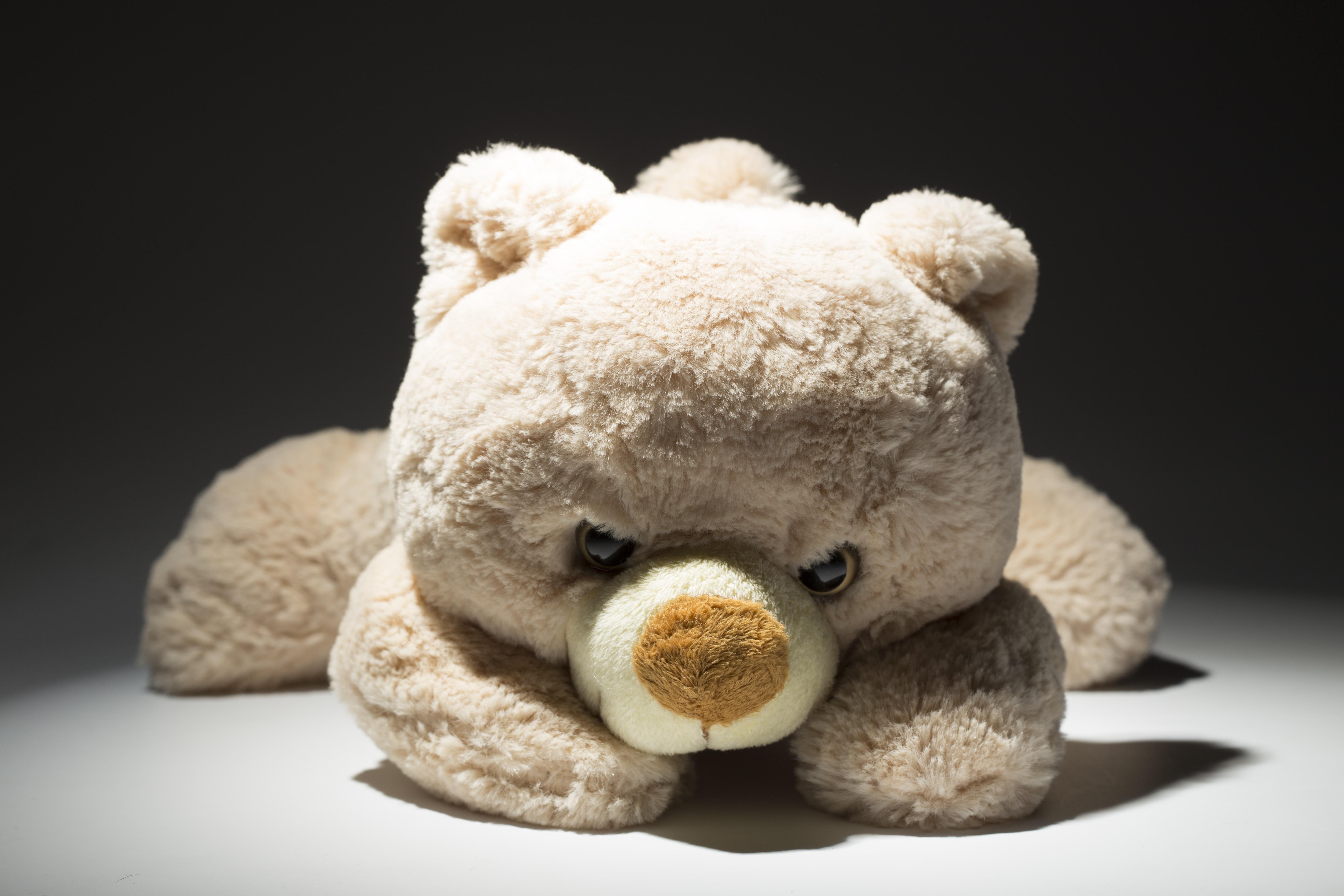 картинки про мягких медведей как