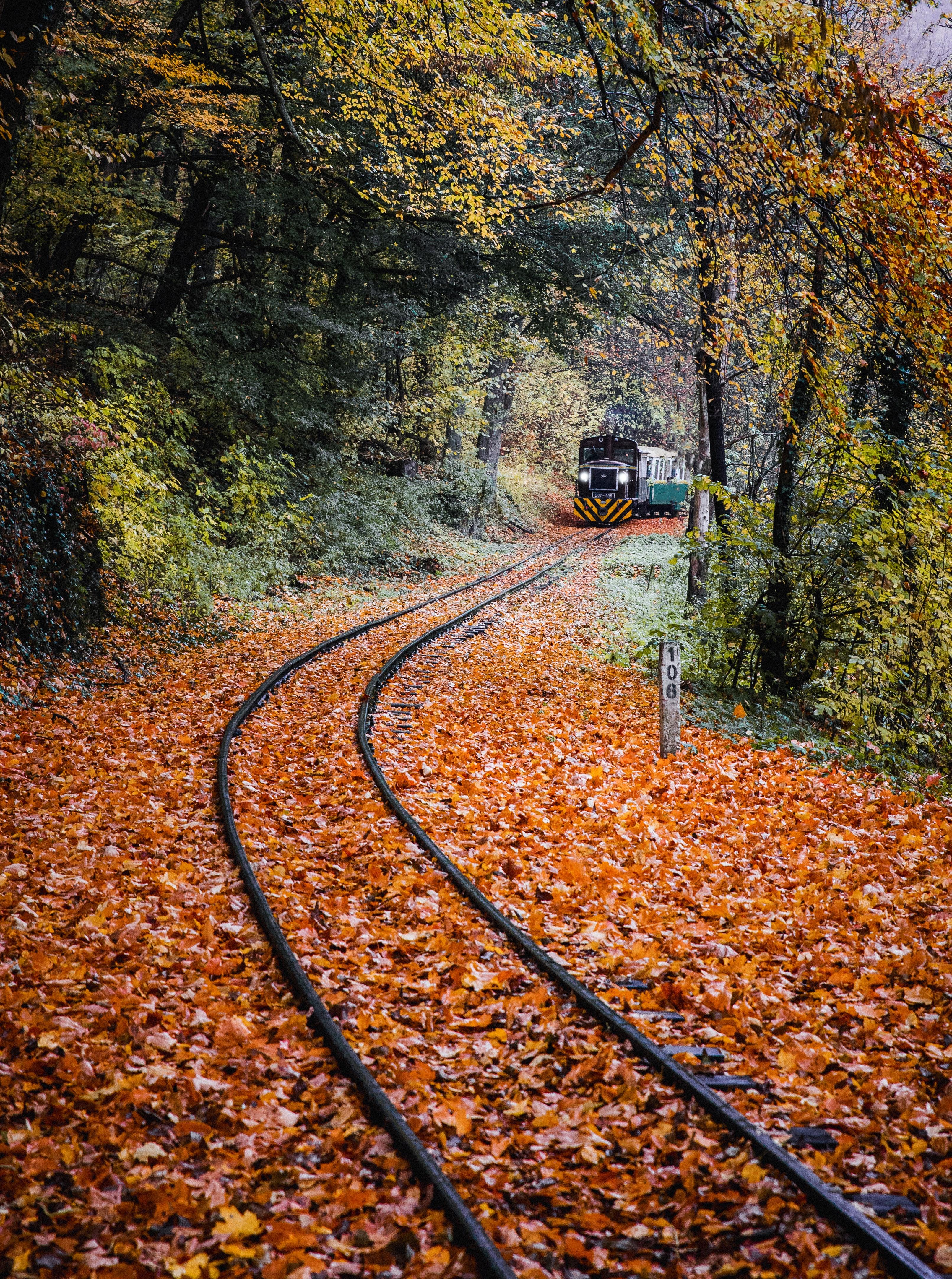 foto de Images Gratuites : Piste, feuille, la nature, l'automne, chemin ...